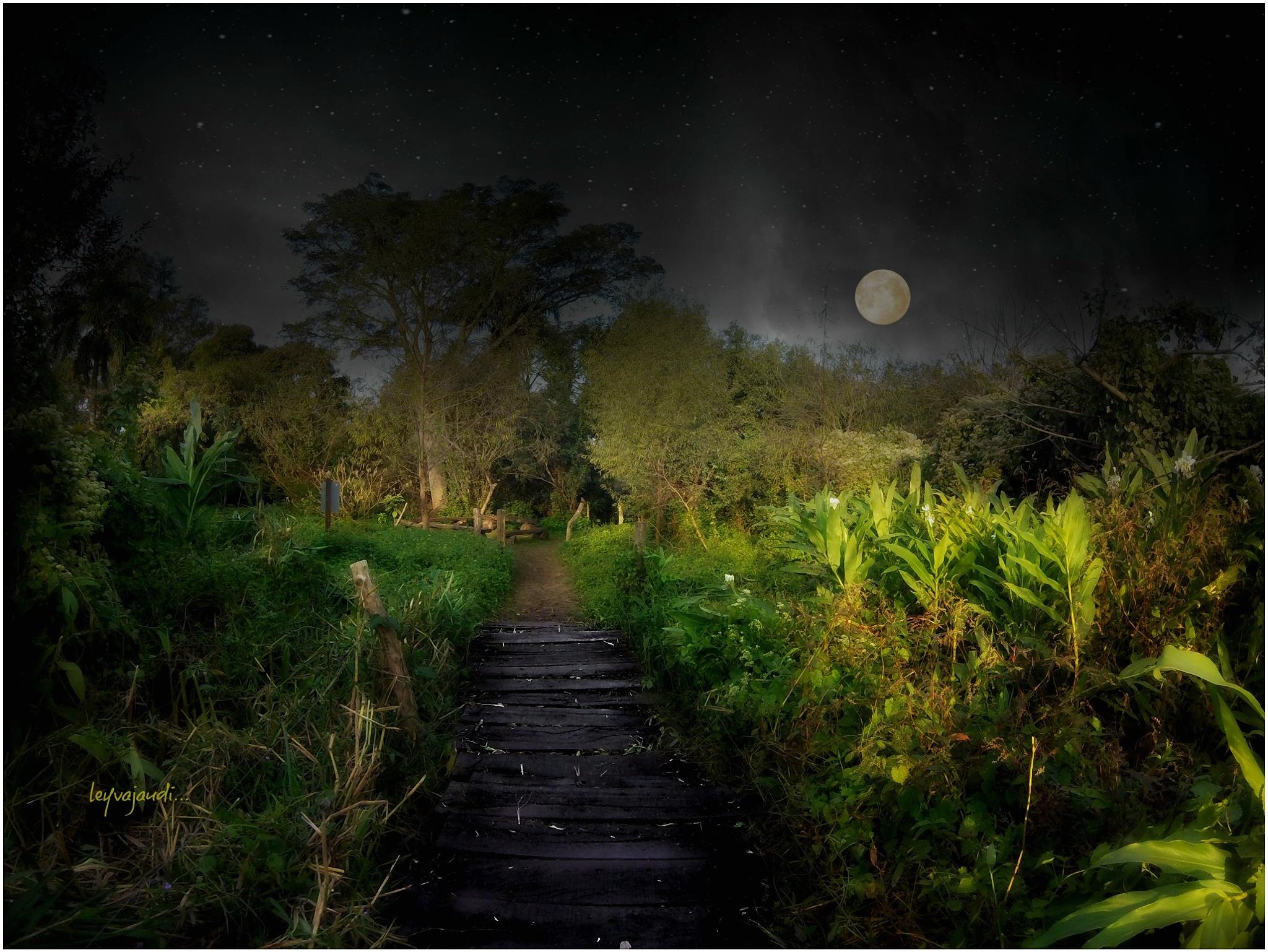 Clair de Lune... by leyvajaudi