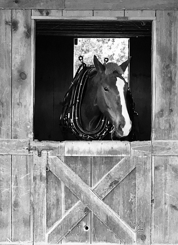 Horse in Stable by becky.c.jones.3