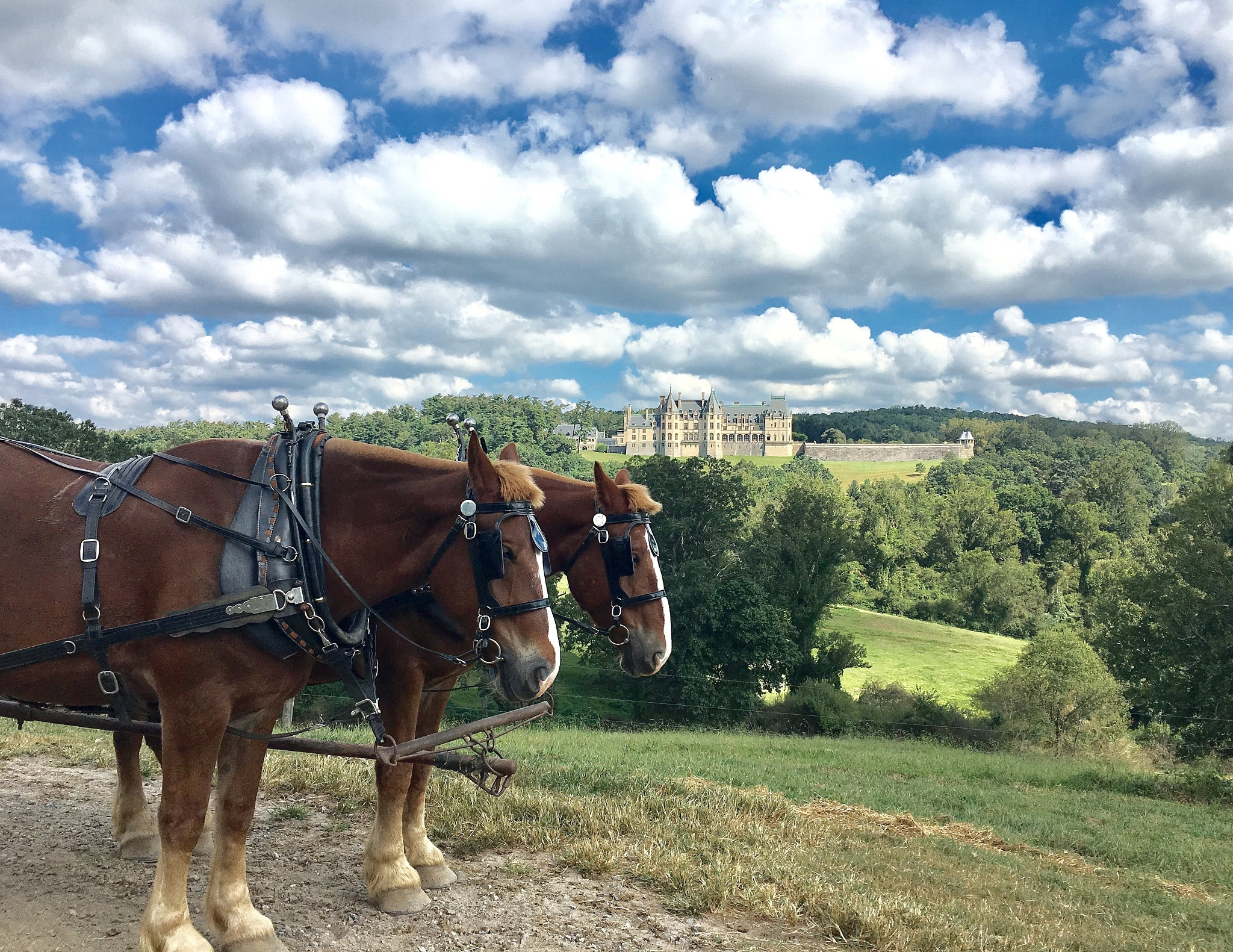 Horse Tour of Biltmore Estate by becky.c.jones.3