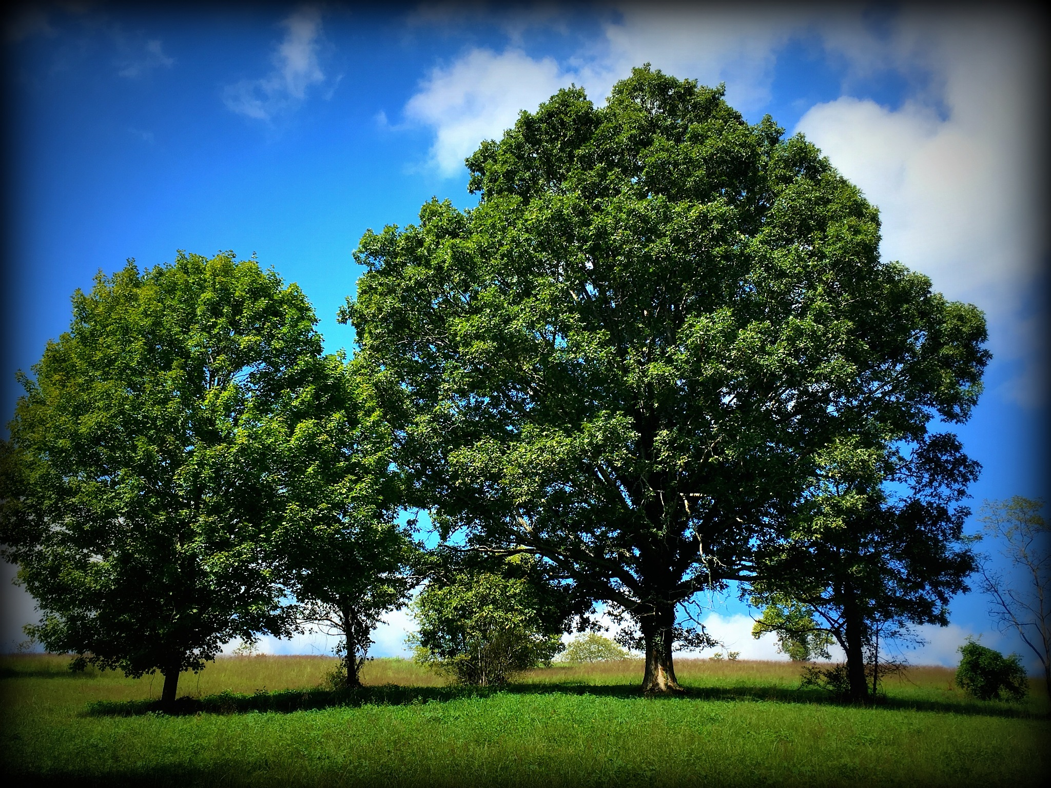 Trees on Biltmore Property by becky.c.jones.3