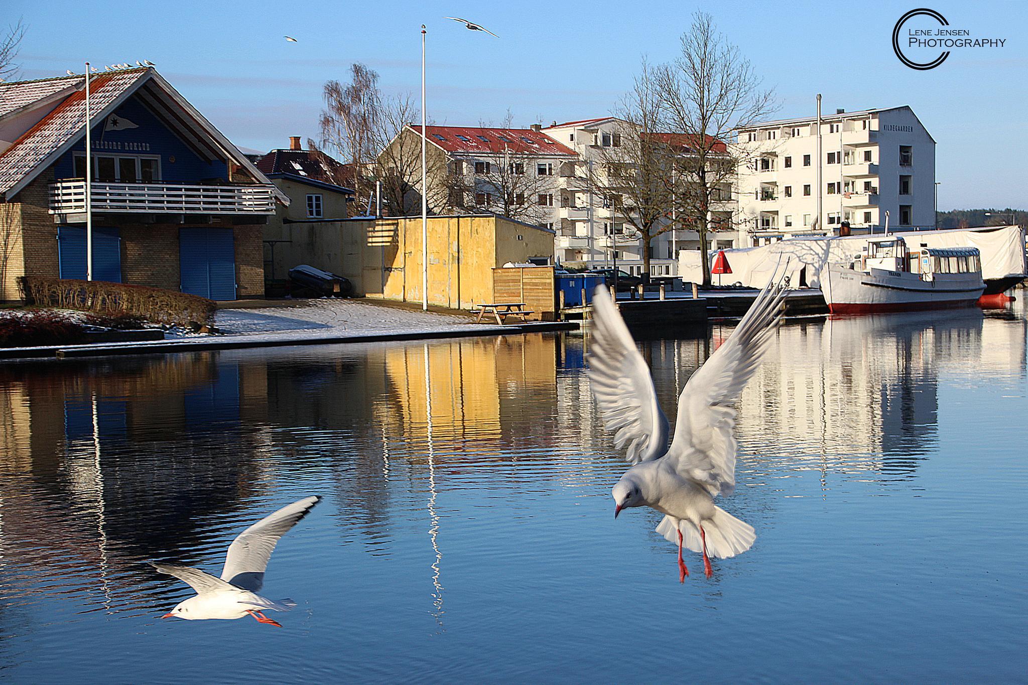 Seagulls by lenejohansen969