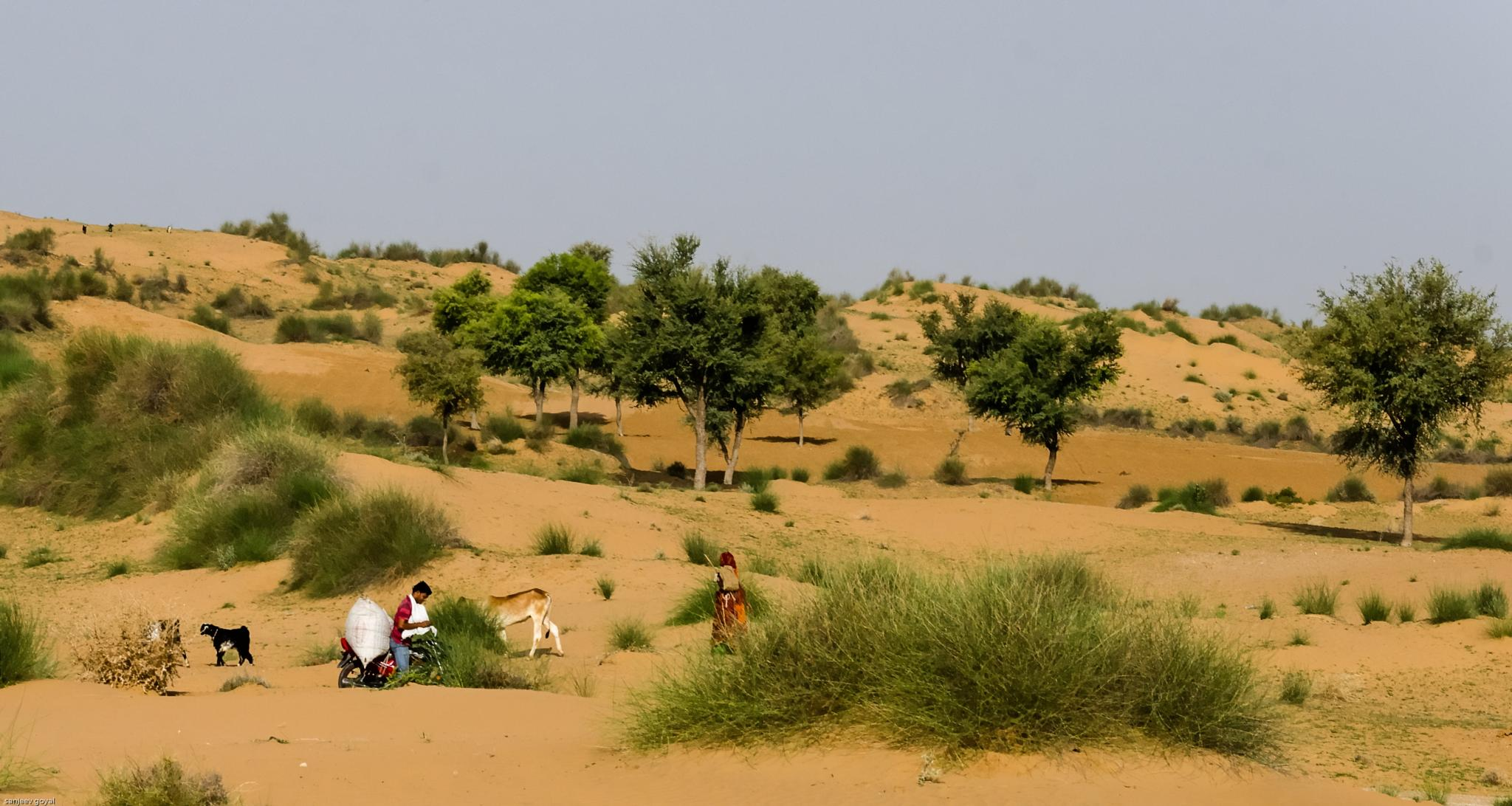 Desert by sanjeev.k.goyal.10