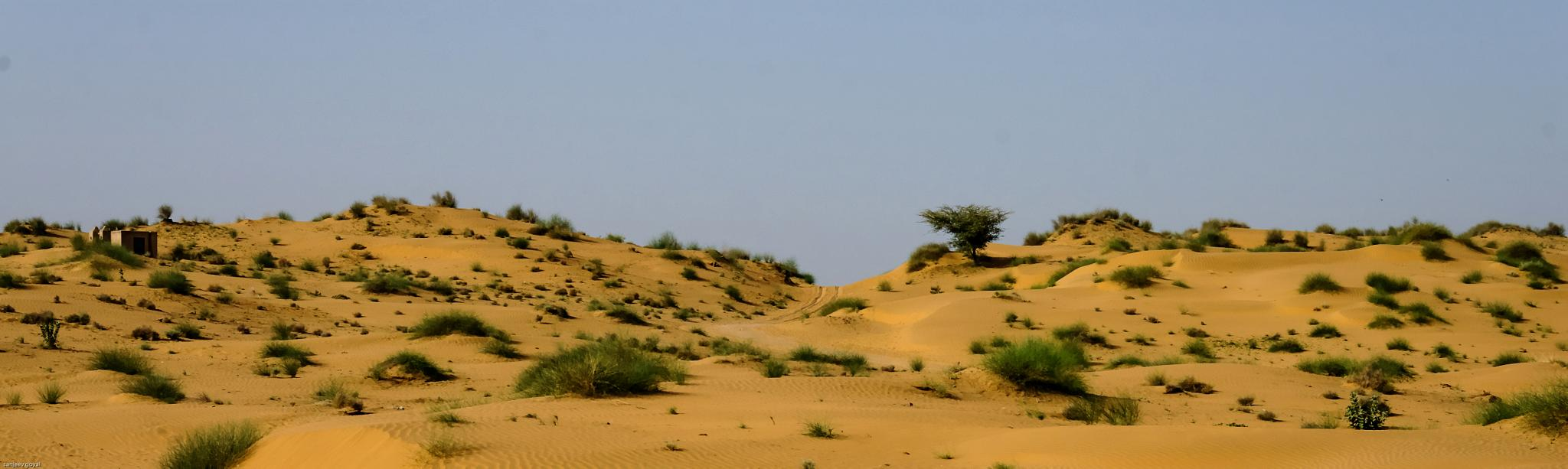 Desert by sanjeev.k.goyal.10