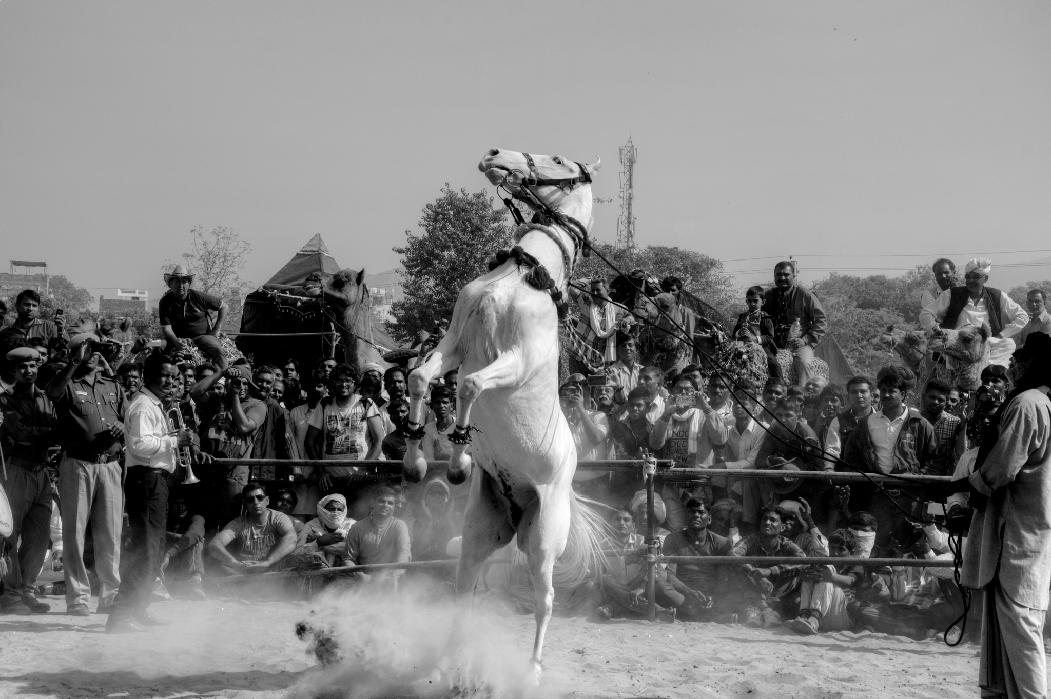 Dancing Horse by sanjeev.k.goyal.10