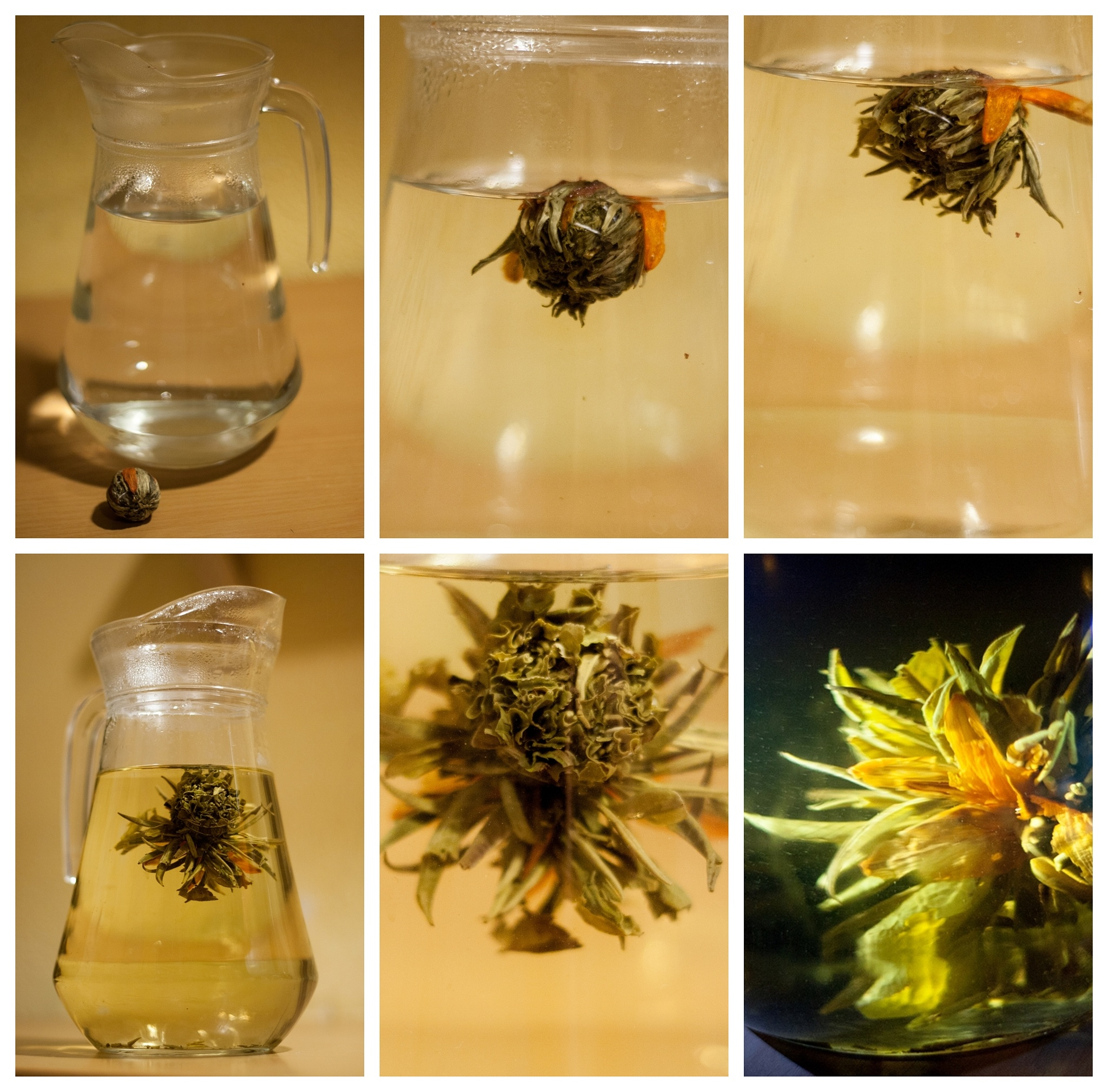 Experiment - How to get flower from tea.. by piotr.krysiak