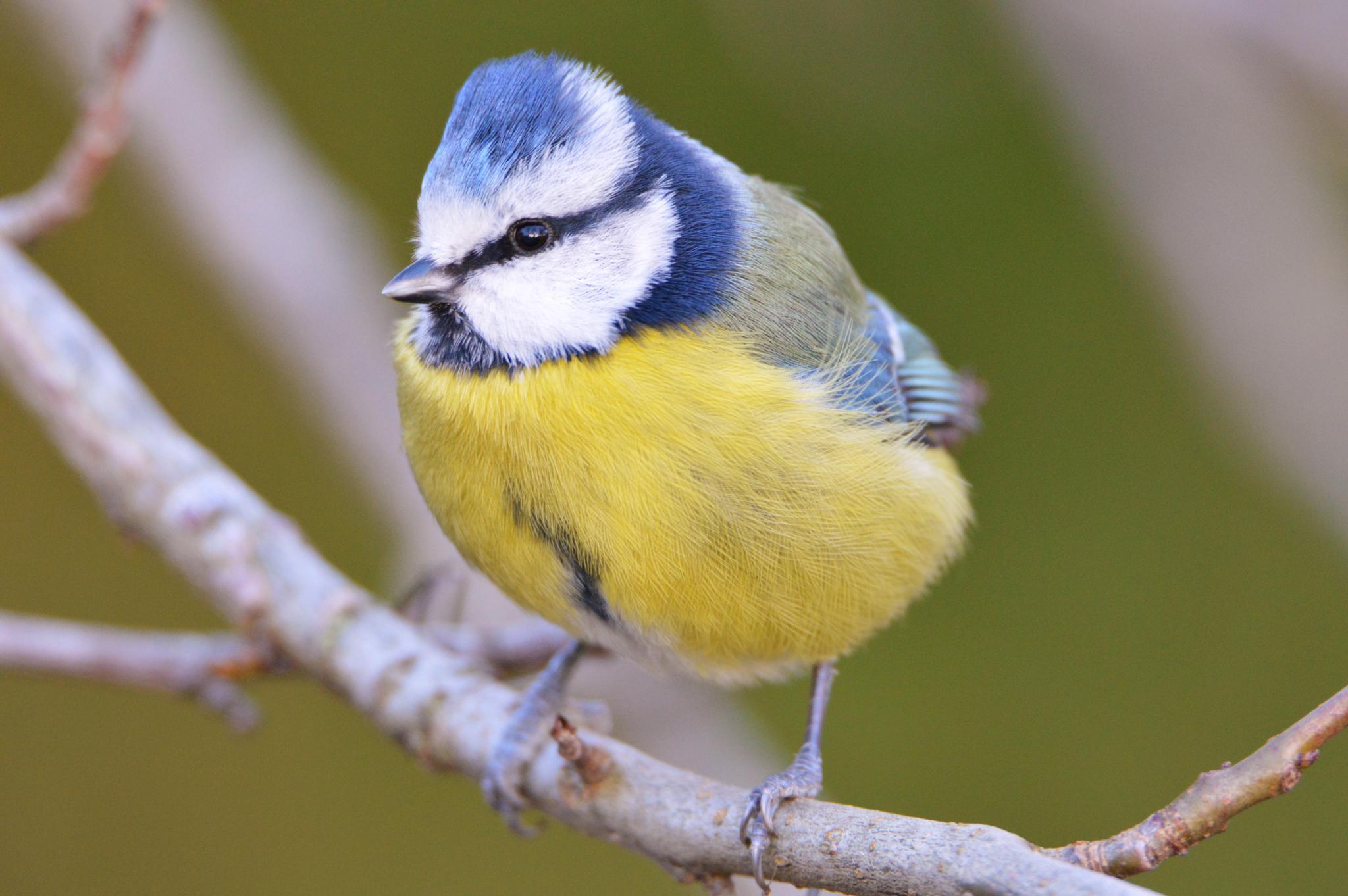 I Love This Little Bird by ukmatti