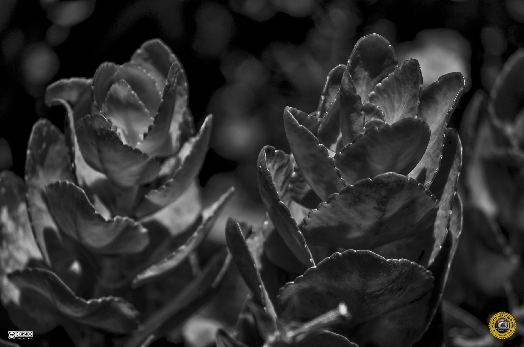 Cactus by Alberto Márquez Marín