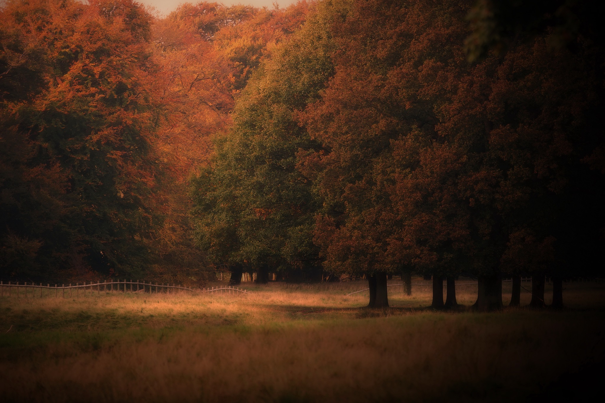 Autumn at the doorstep by NavidQureshi