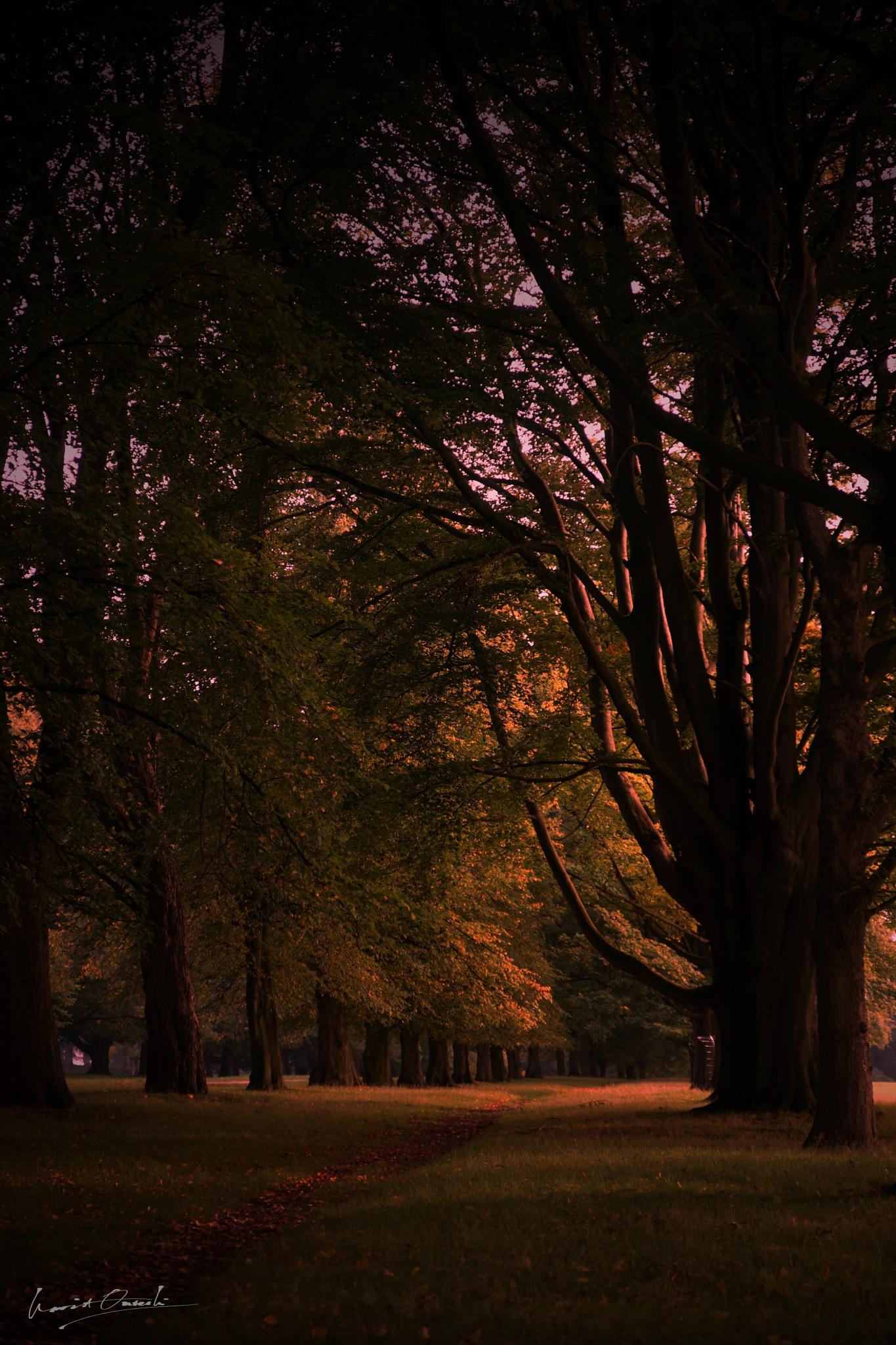 Fall at doorstep by NavidQureshi