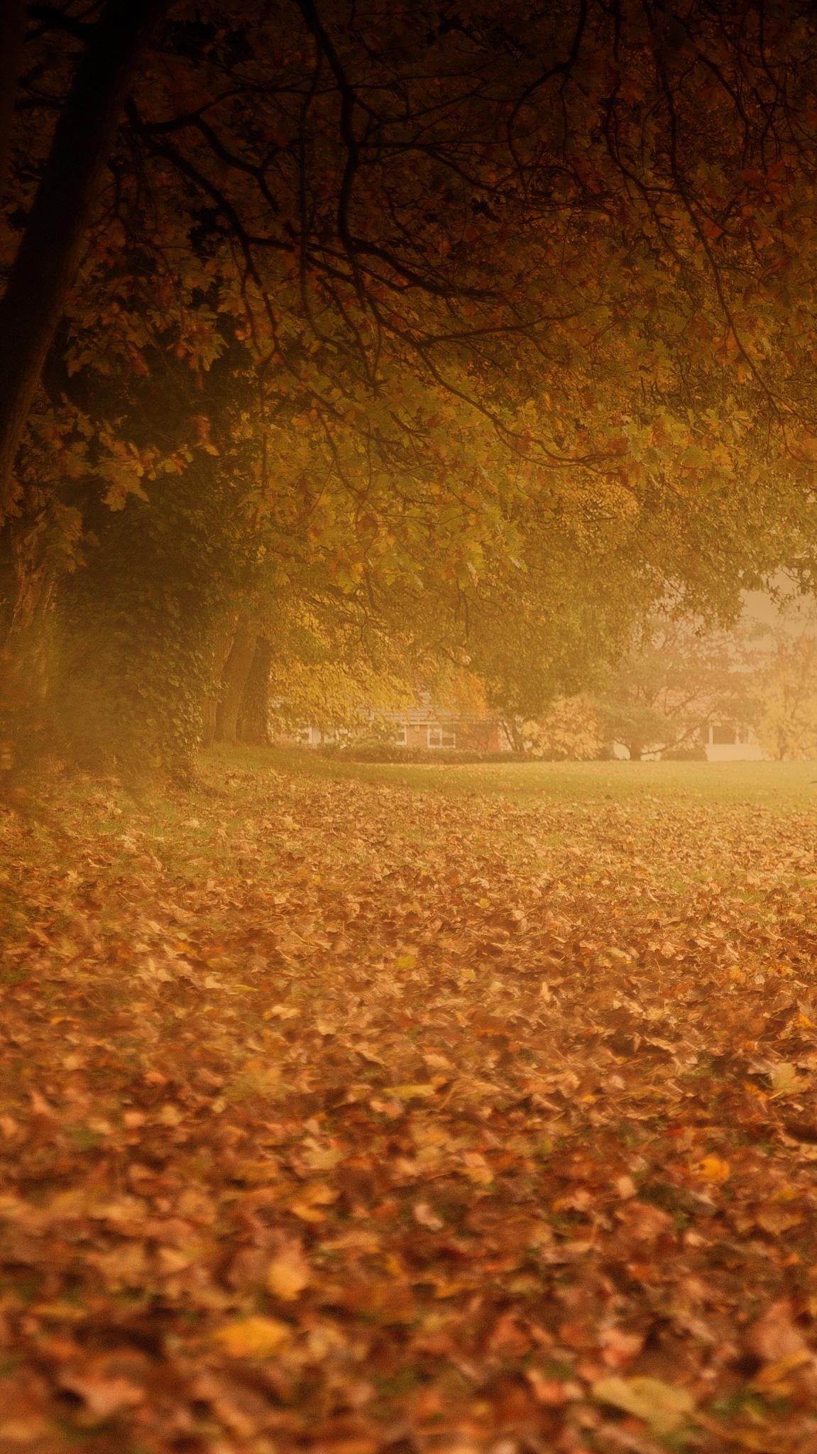 autumn hues4 by navidqureshi