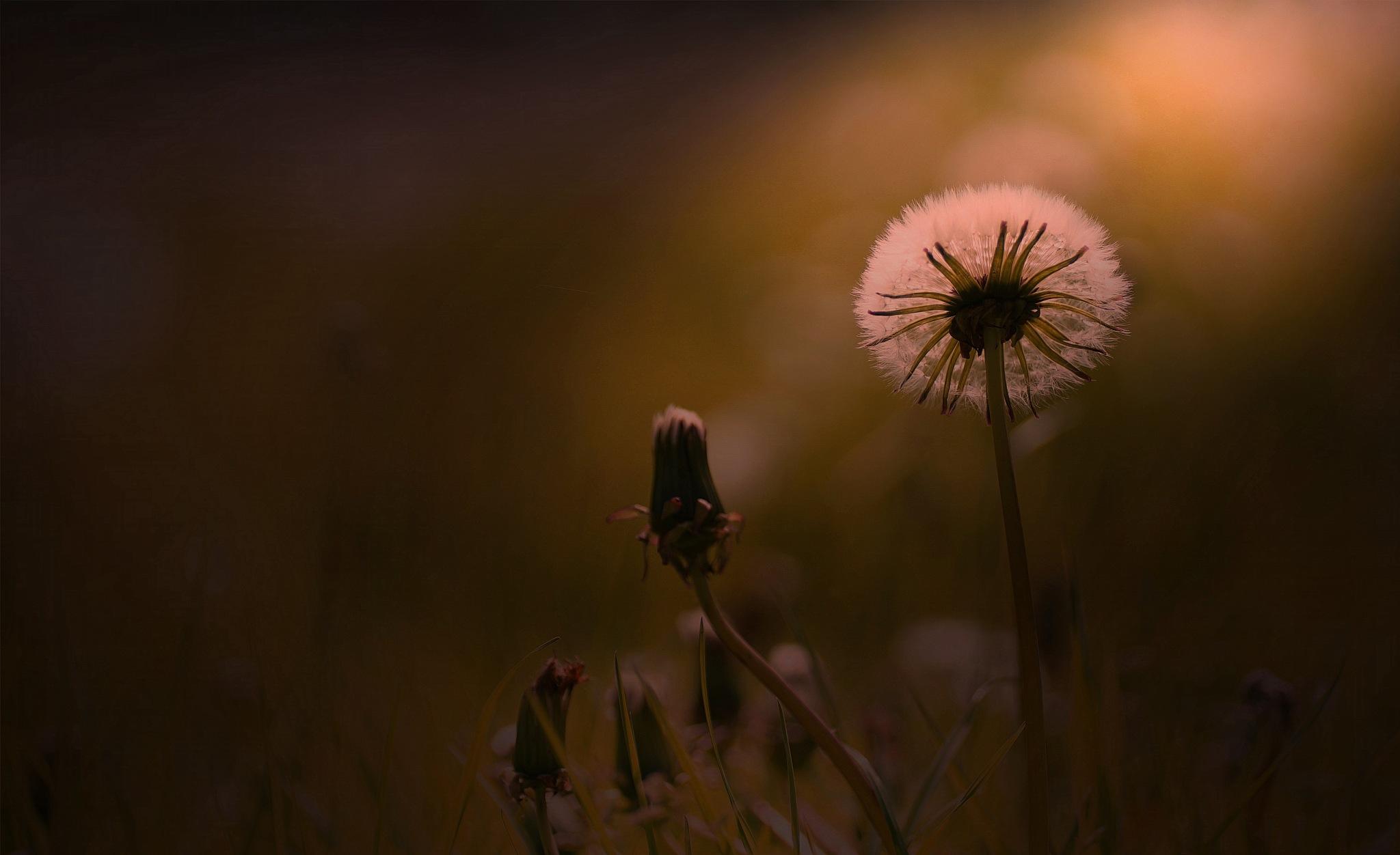 cheshire morning by navidqureshi