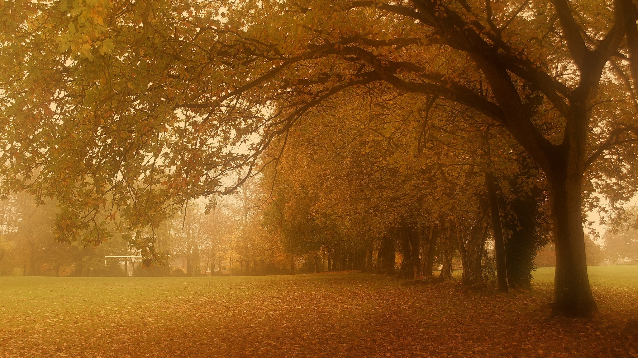 autumn in the air by navidqureshi