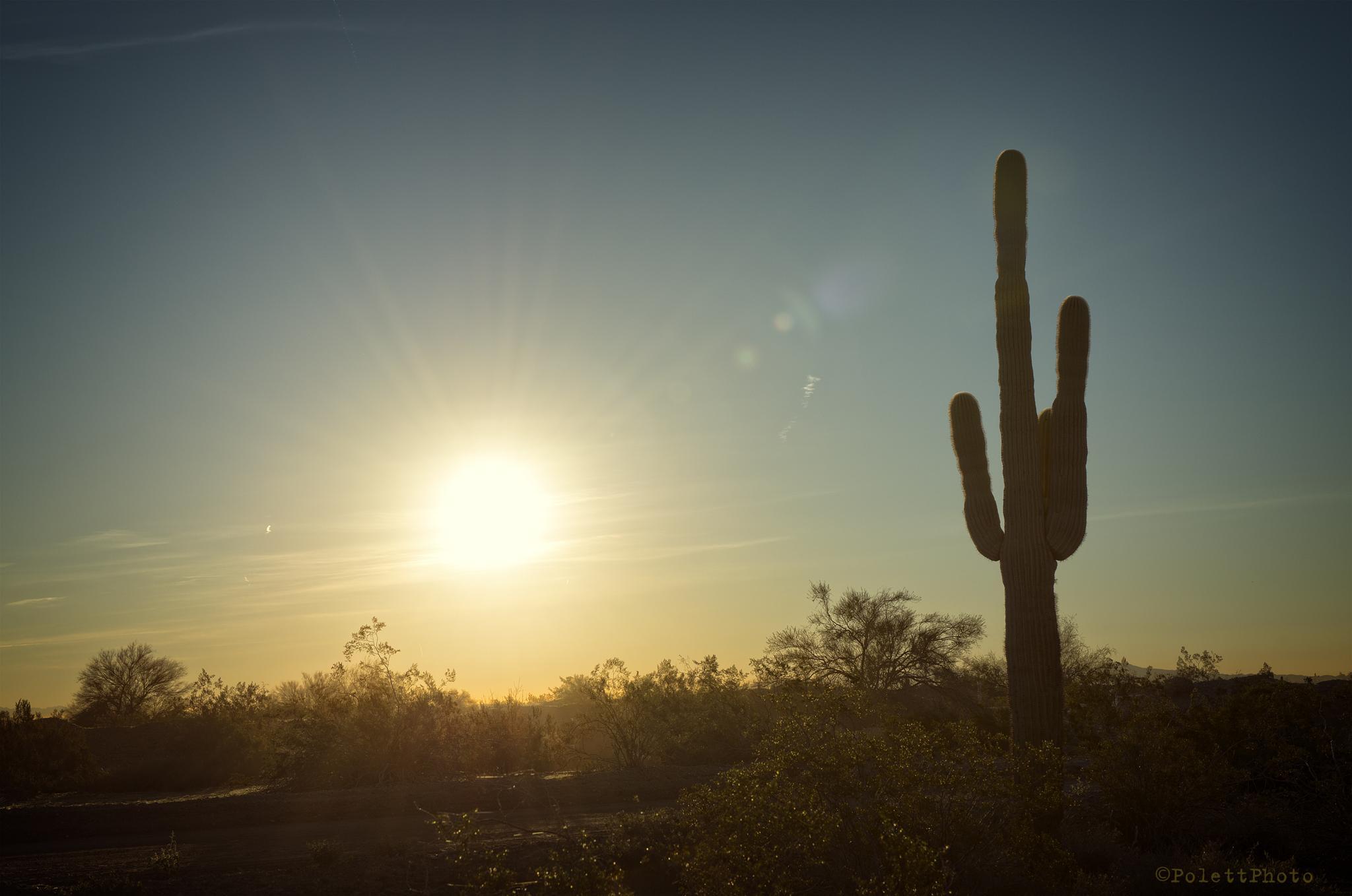 Saguaro Sunrise by Polettphoto
