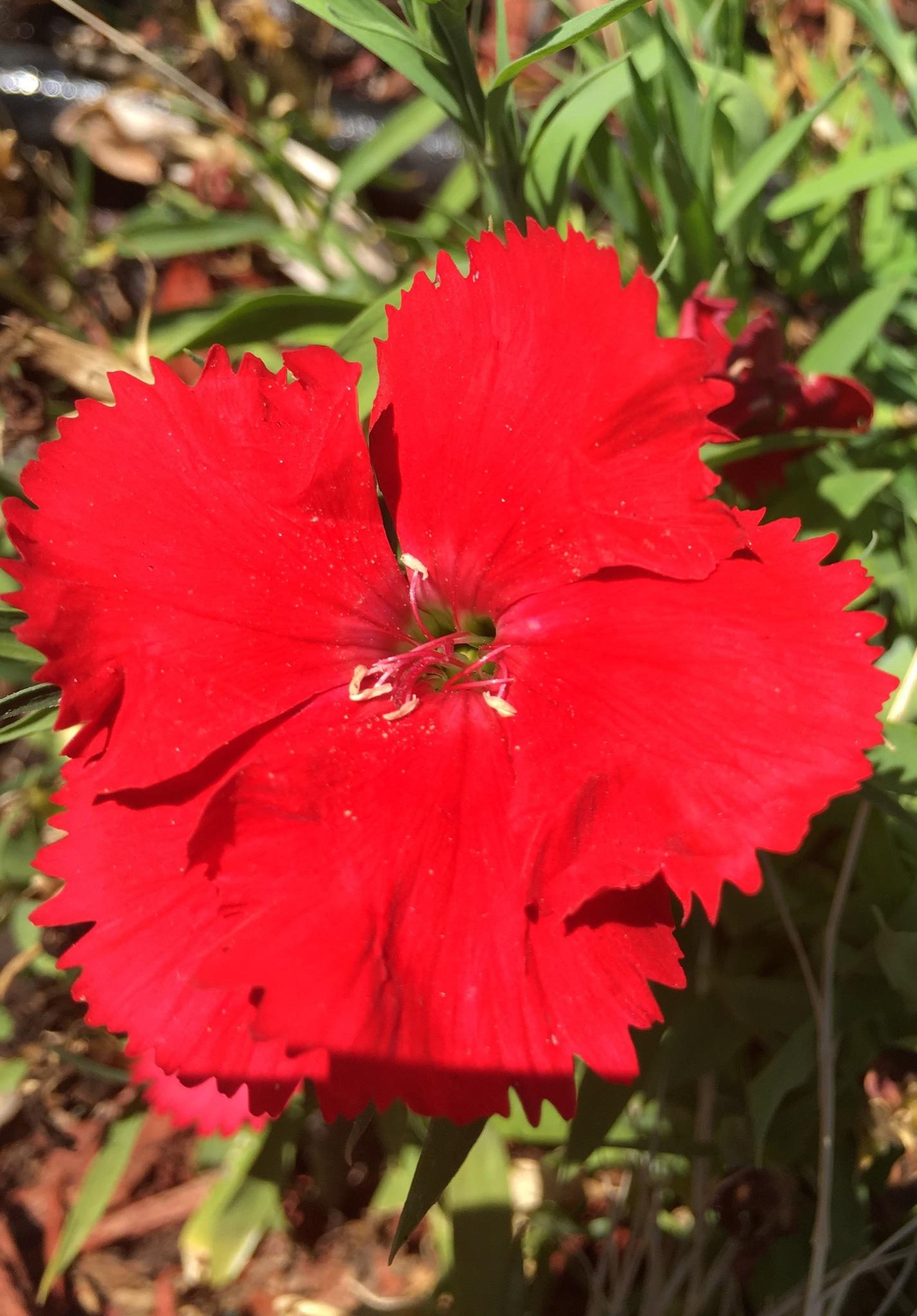 Red hot by pamela.kanarr