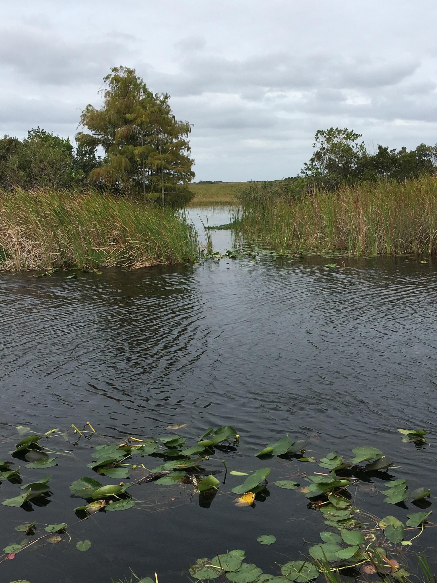Everglades waterways  by pamela.kanarr