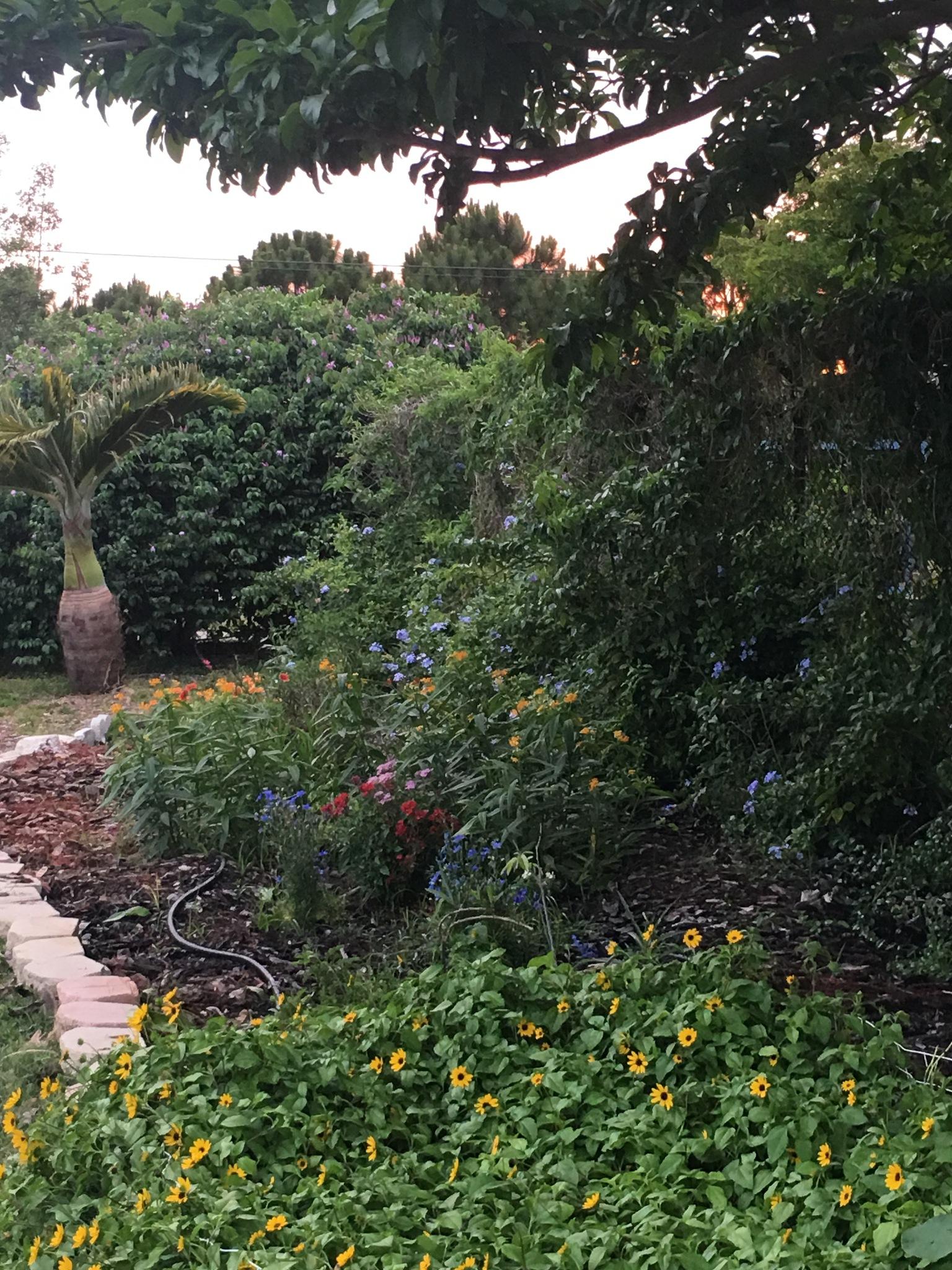 The butterfly garden  by pamela.kanarr