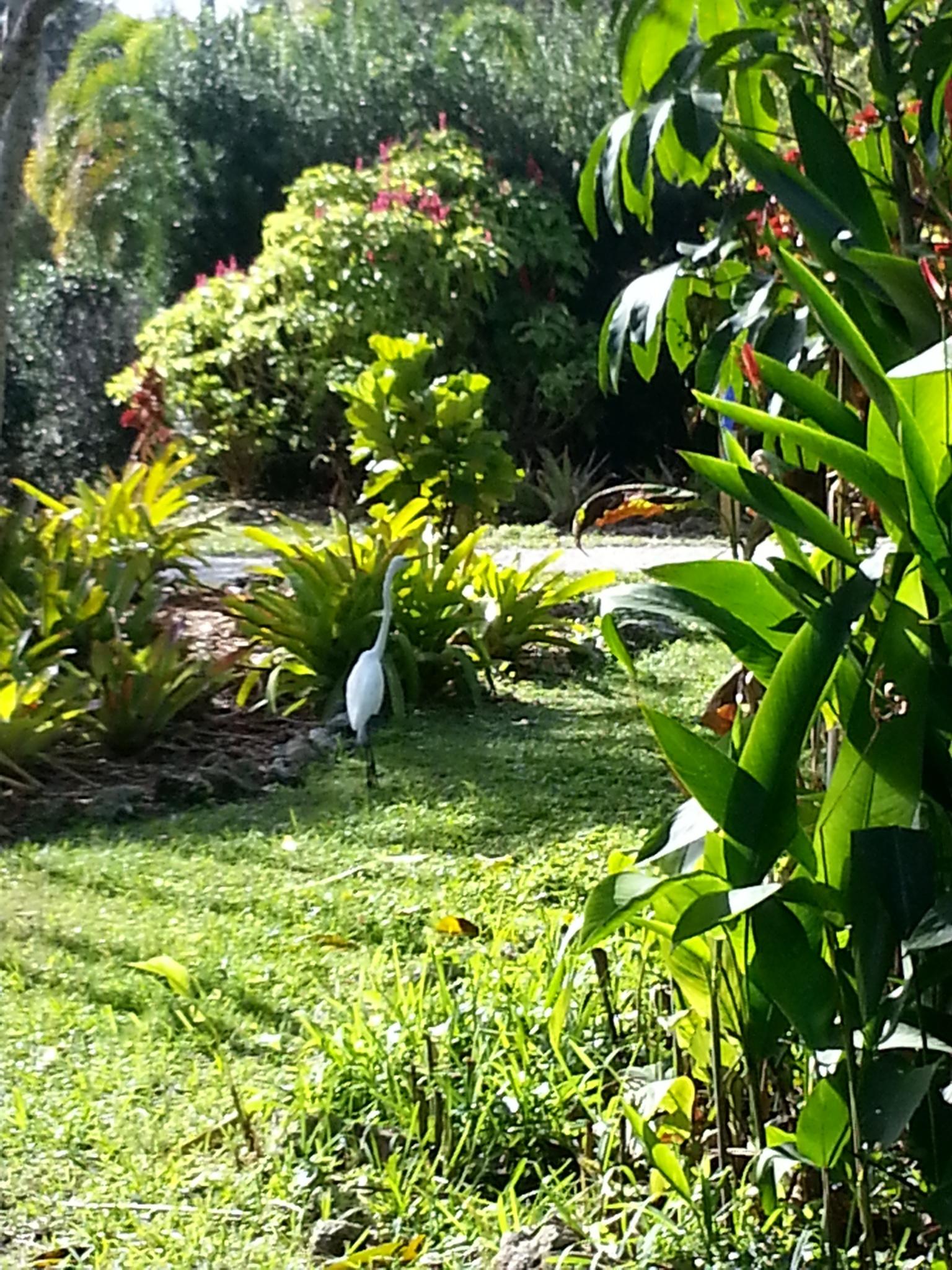 egret 2 by pamela.kanarr