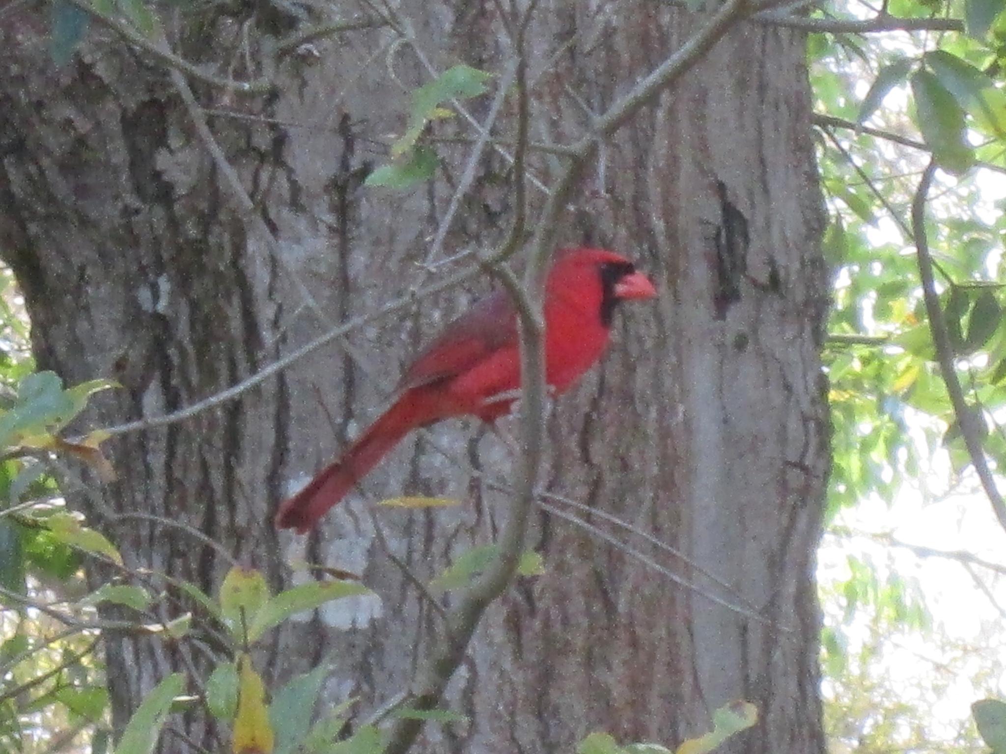 seeing red by pamela.kanarr