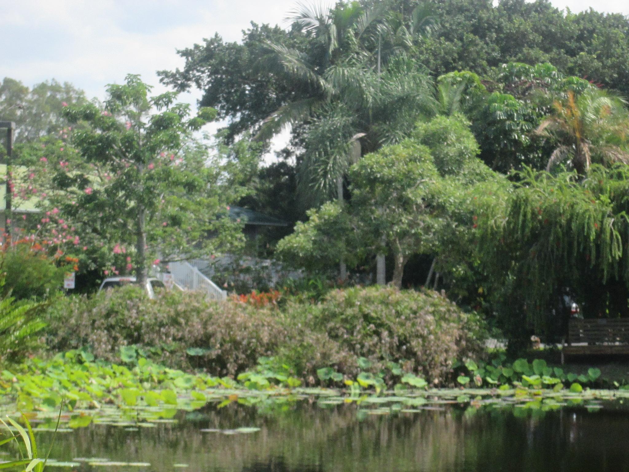 the pond by pamela.kanarr