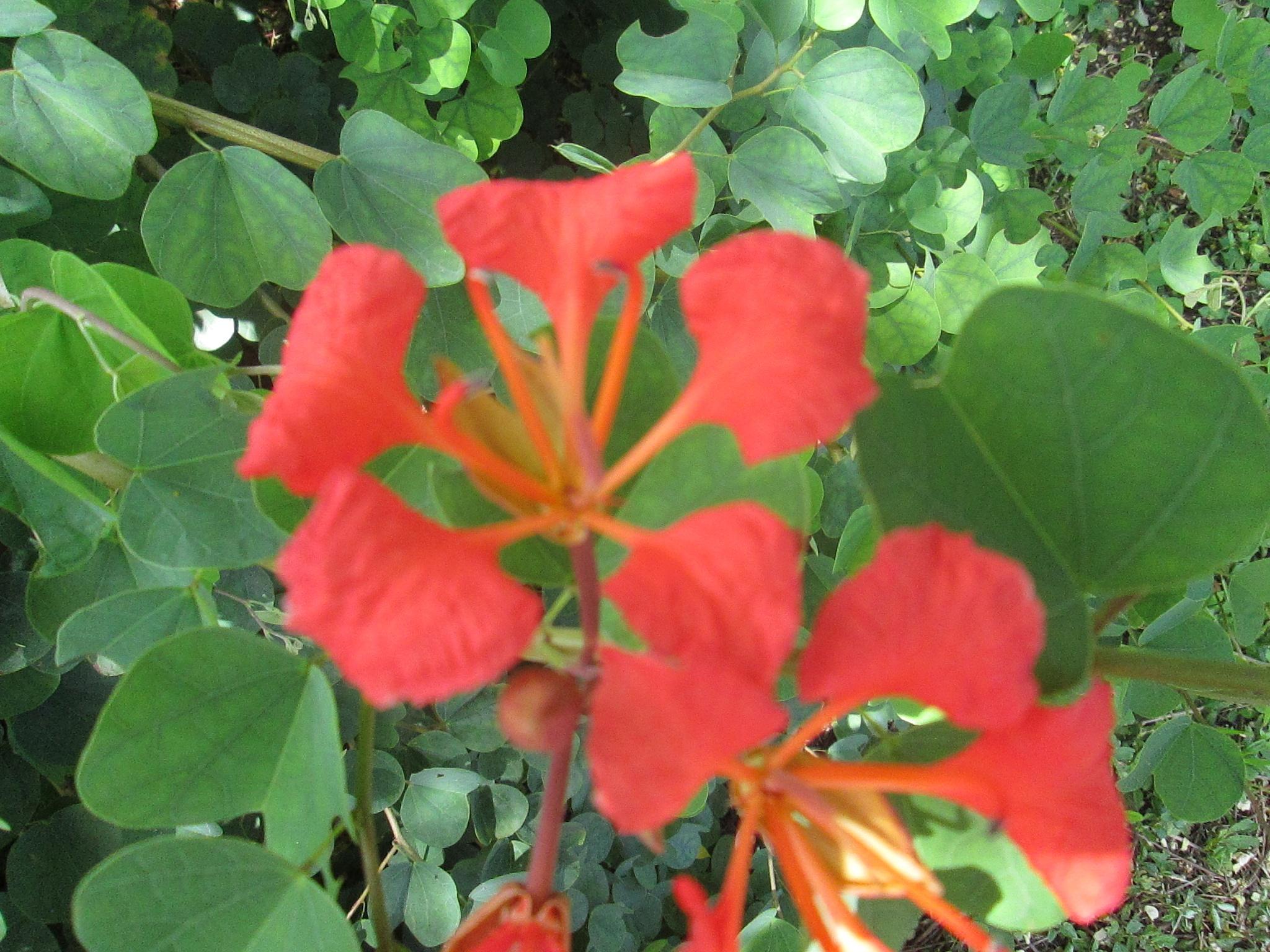 bold red by pamela.kanarr