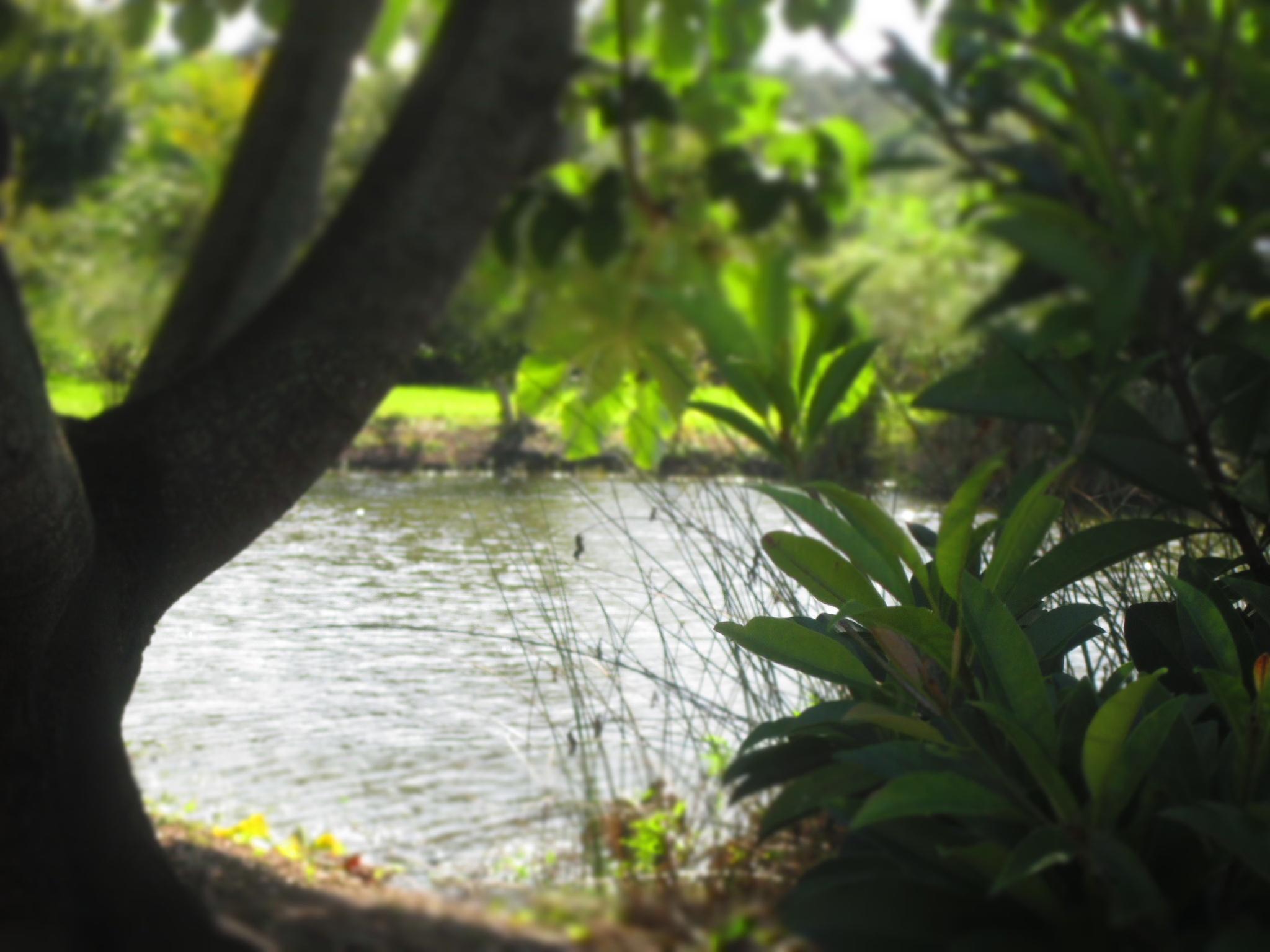 view through the trees by pamela.kanarr