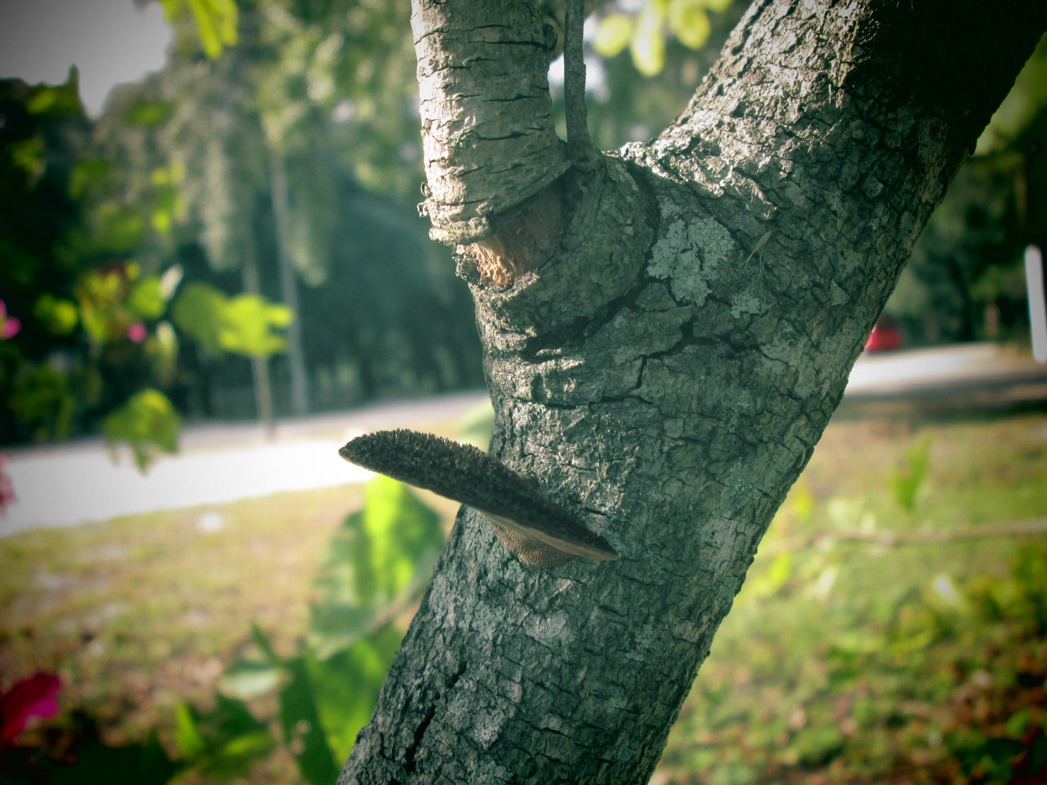 fungus by pamela.kanarr