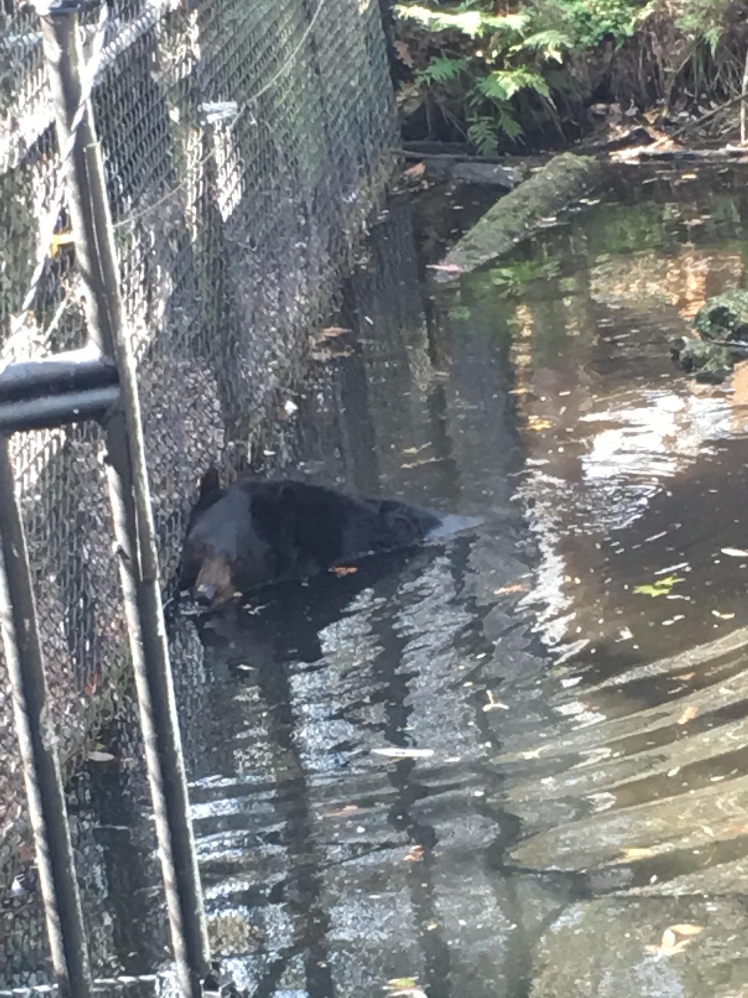 bear bath by pamela.kanarr