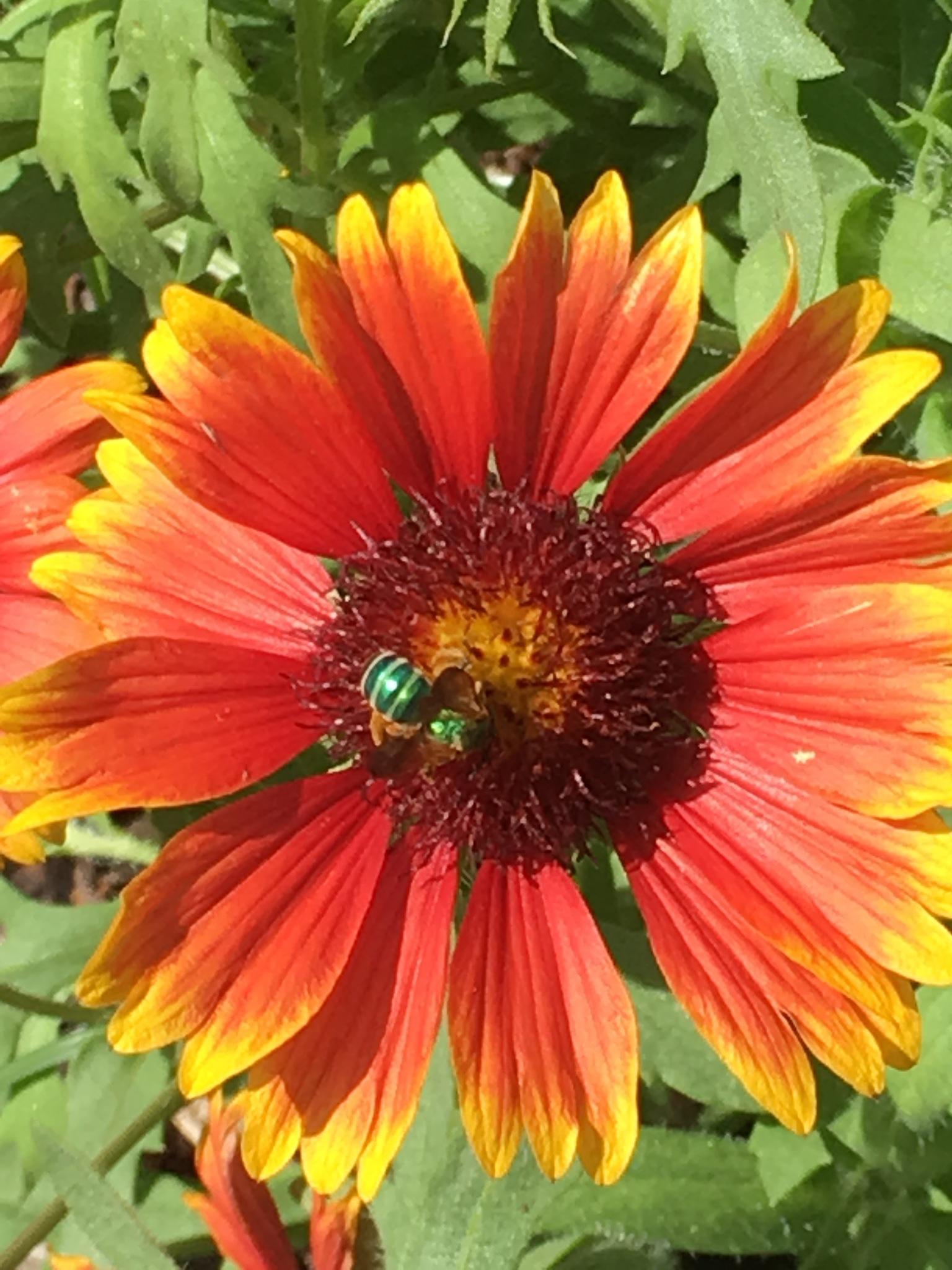 Green bee  by pamela.kanarr