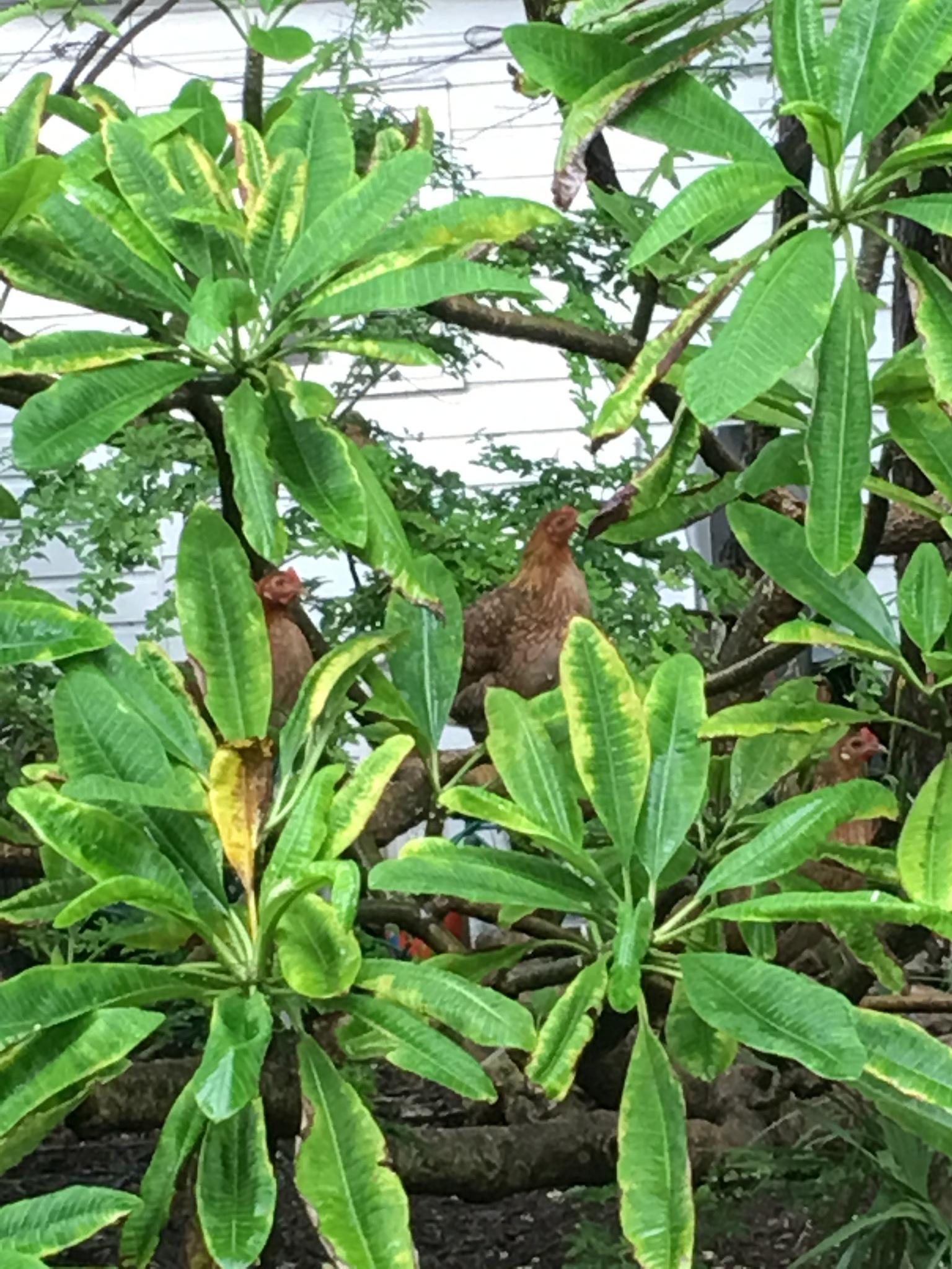 Birds in trees  by pamela.kanarr