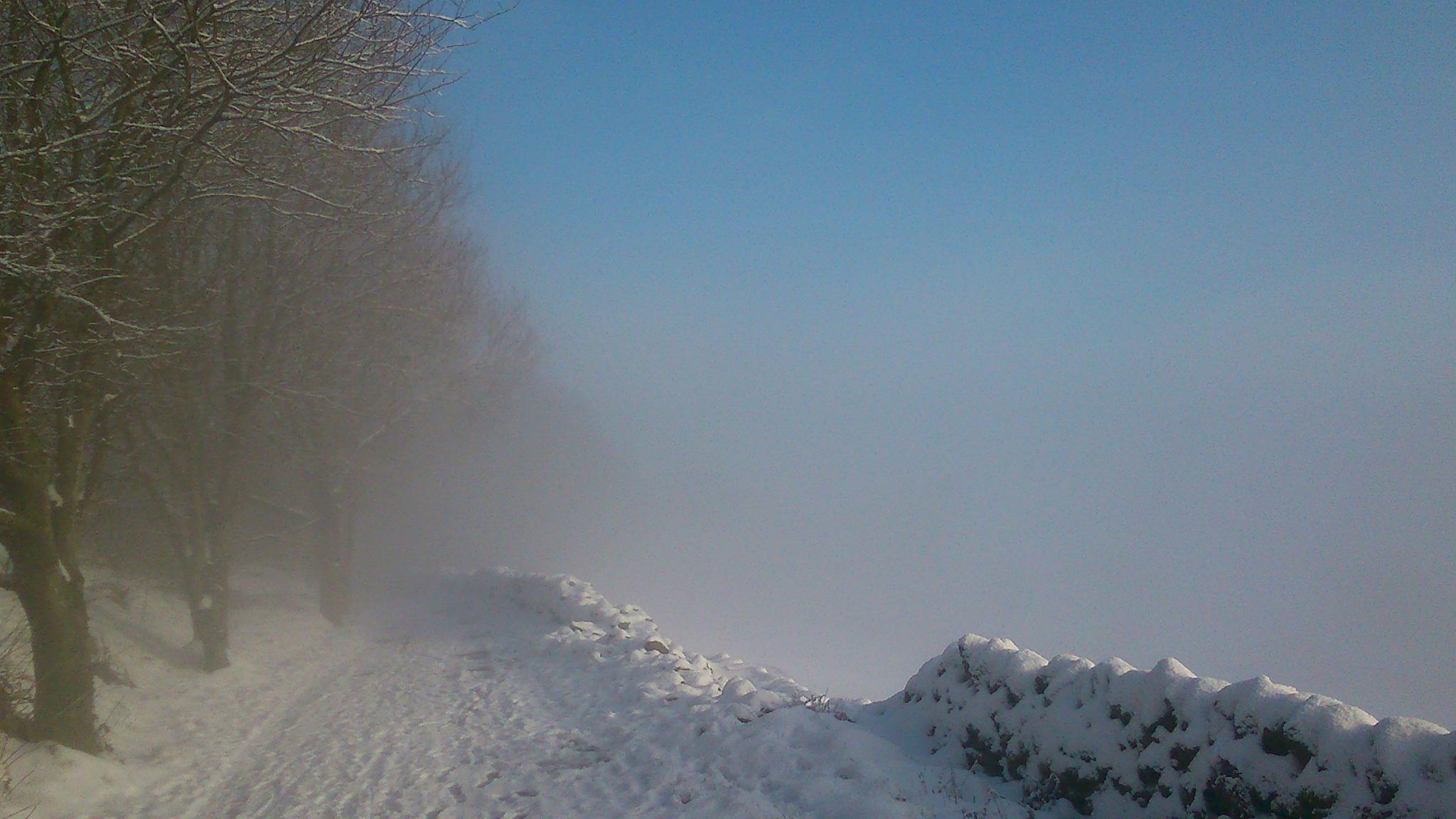 Just above the mist by mandiehart