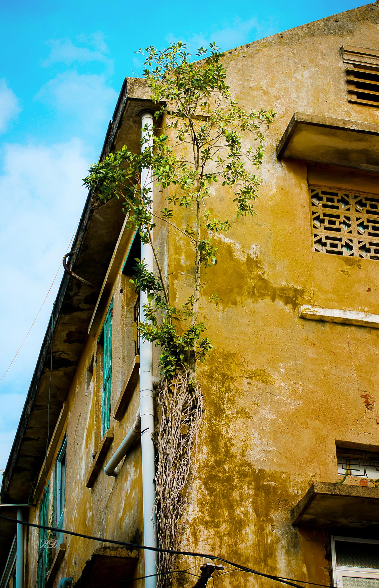 Lonely tree on the old house... by duduchuy