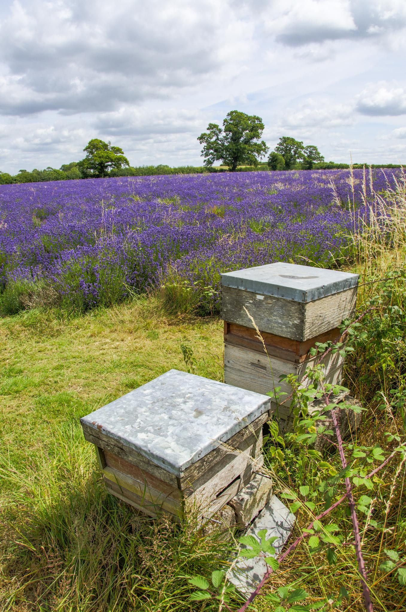 Hives by Tony Bridges