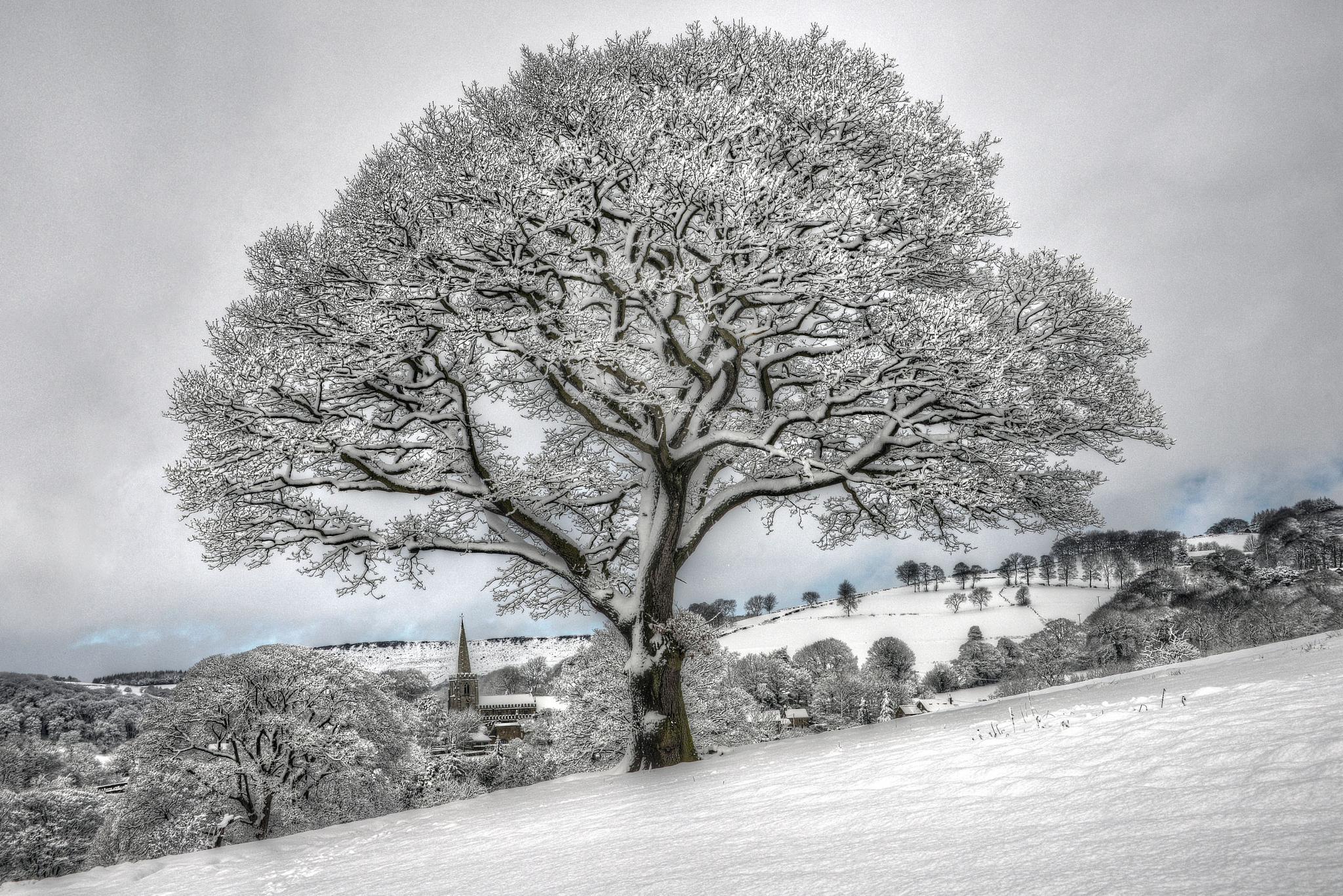 Snowy Tree by SimonBull