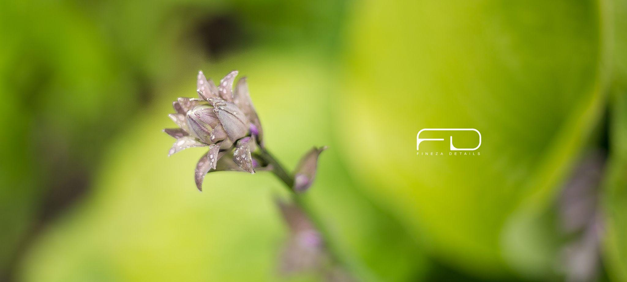 lilac by Khalid_Fineza  Details