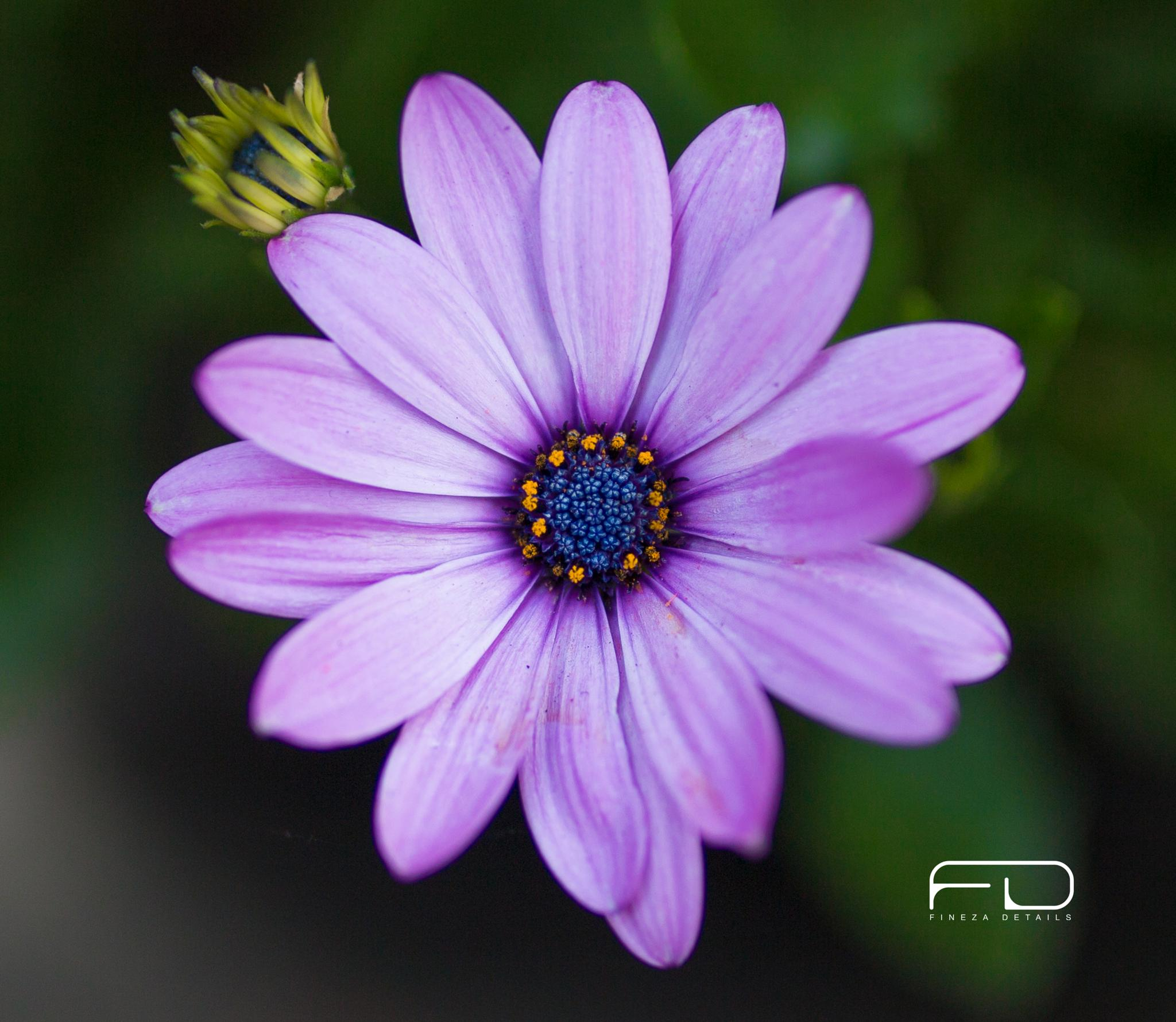 Flower by Khalid_Fineza  Details