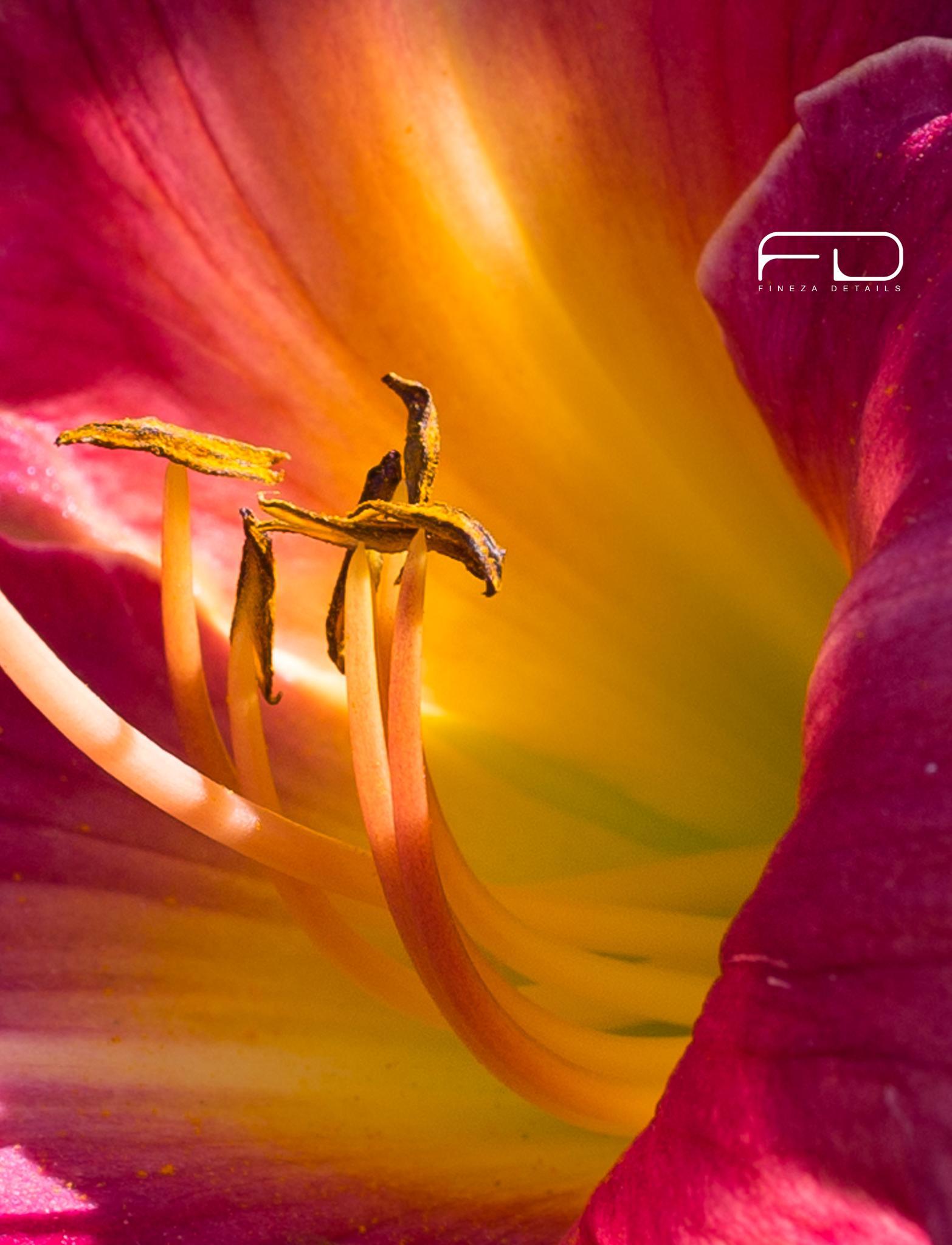 Orchid by Khalid_Fineza  Details