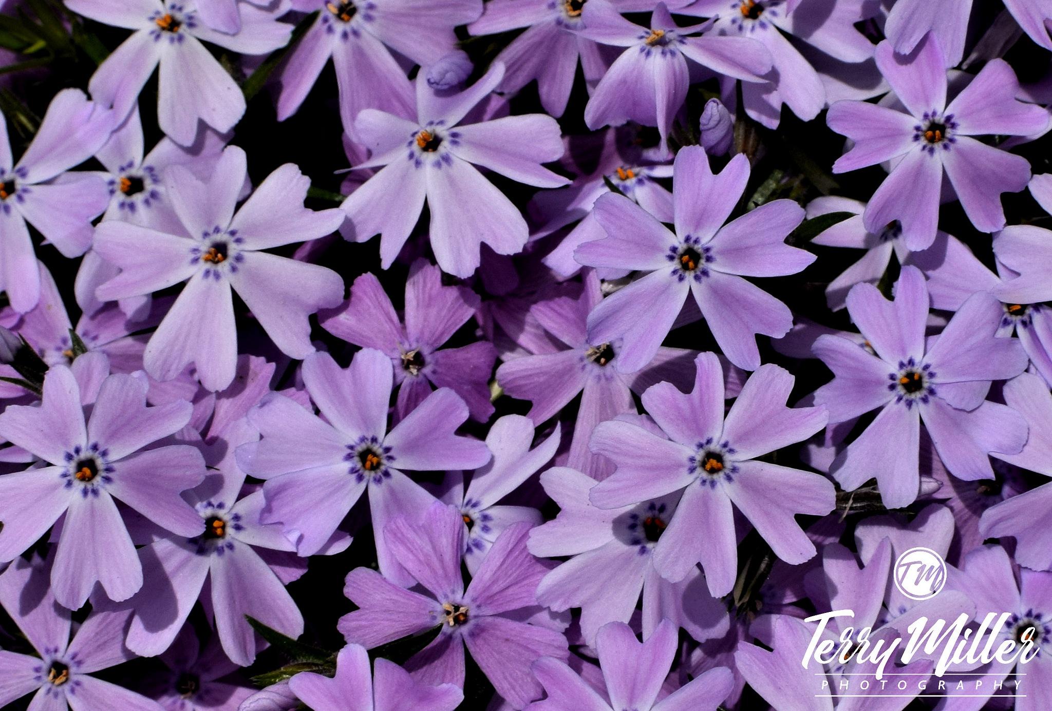 Purple by Tegrey