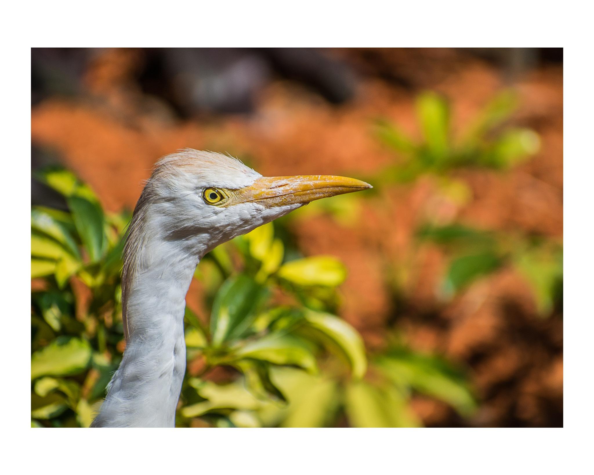 Bird by Tegrey