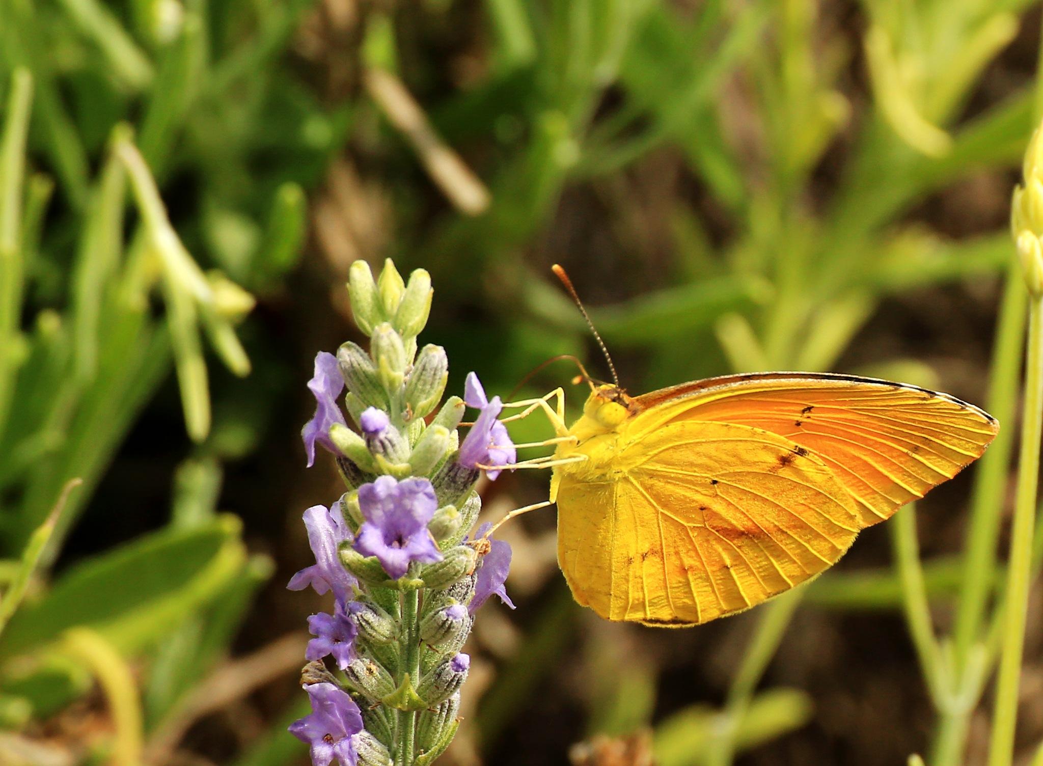 Mellow Yellow Flier by portillo45