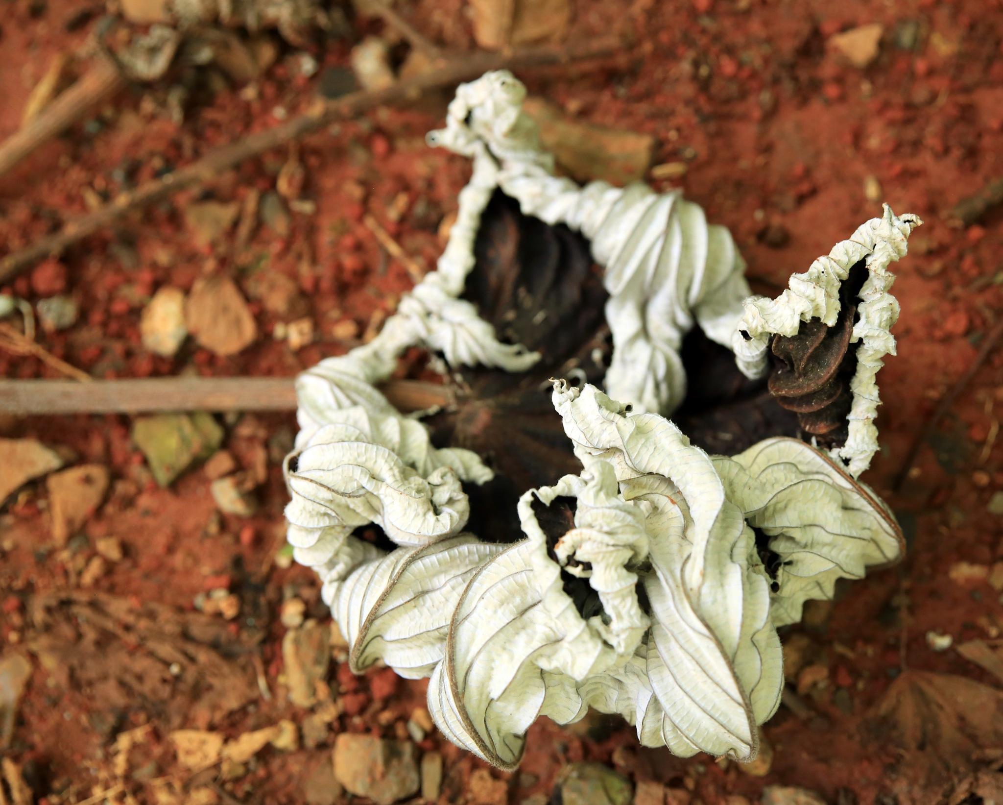 A Leaf by portillo45