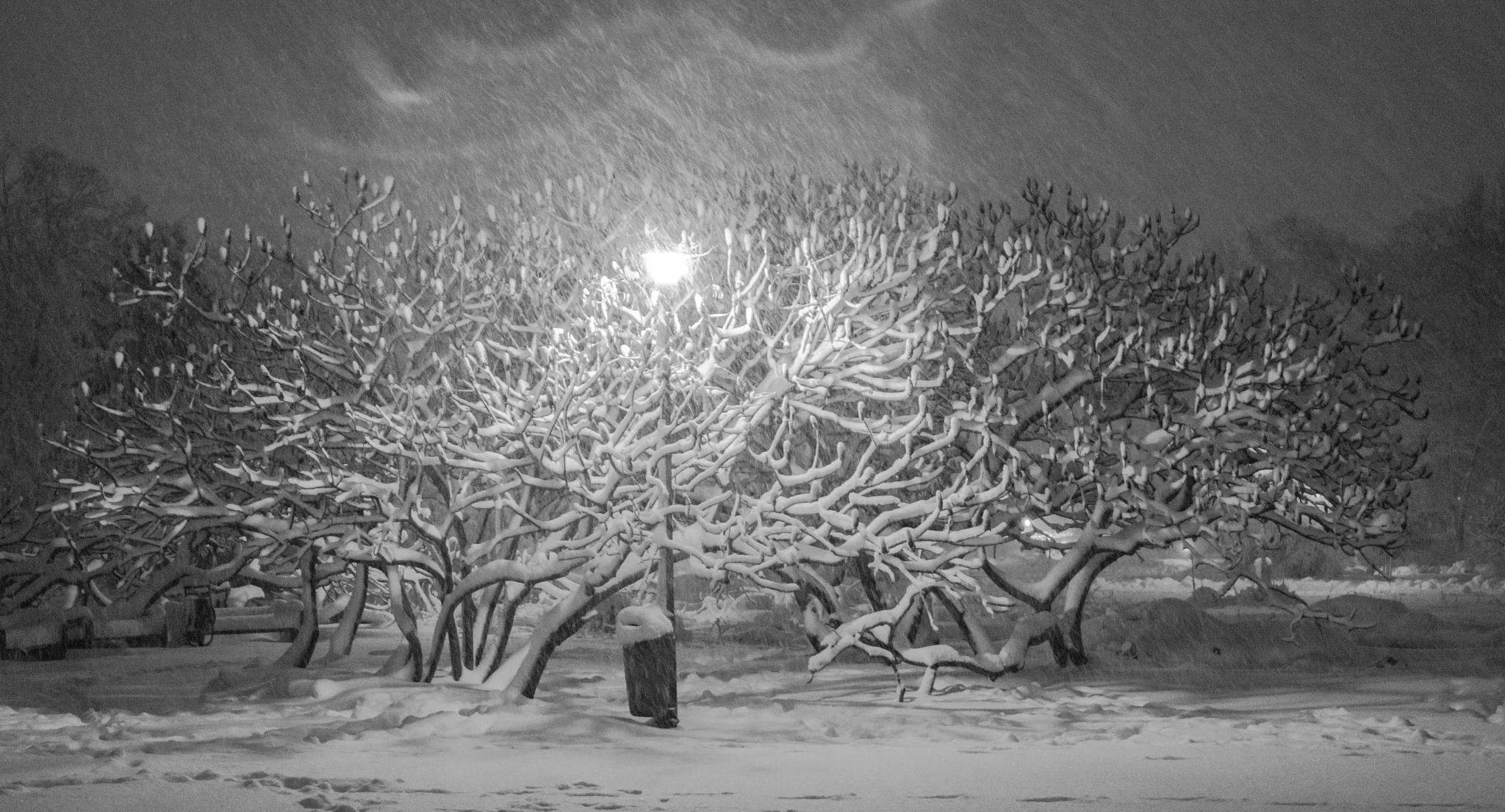 Winter tree by donbarlone