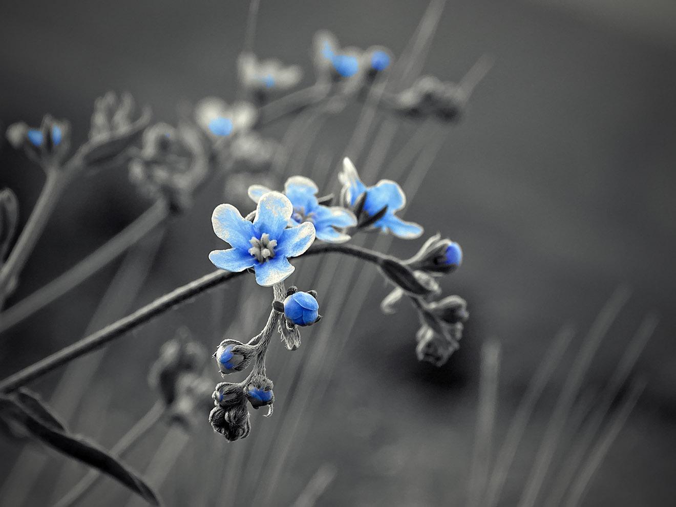 The blue flowers by Jamal 4 Rojava