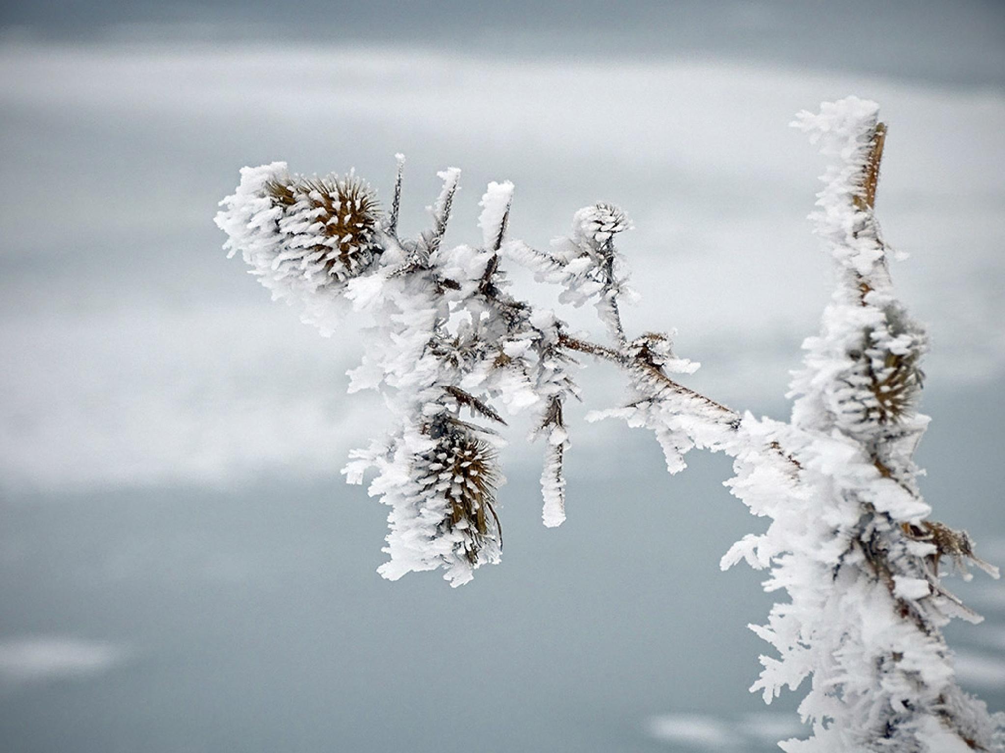 Frozen pond 3 by Jamal -Kurdistan