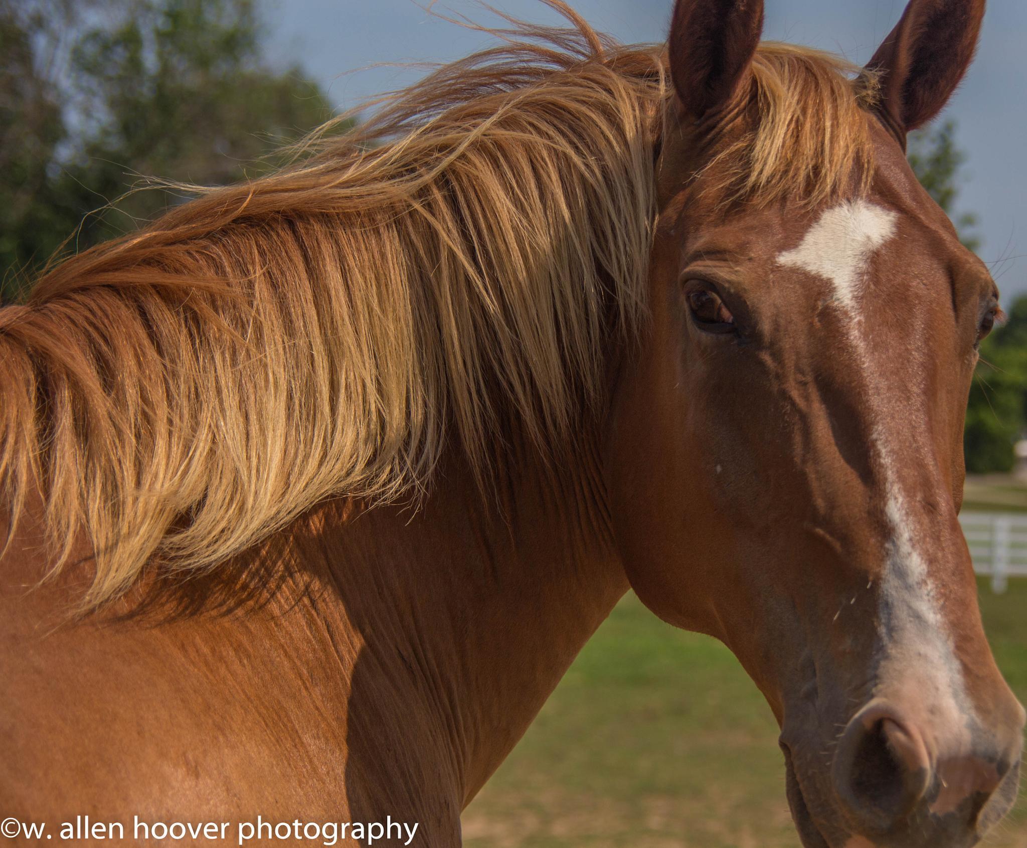A day at the Kentucky Horse Park, Lexington, KY by Wayne A. Hoover