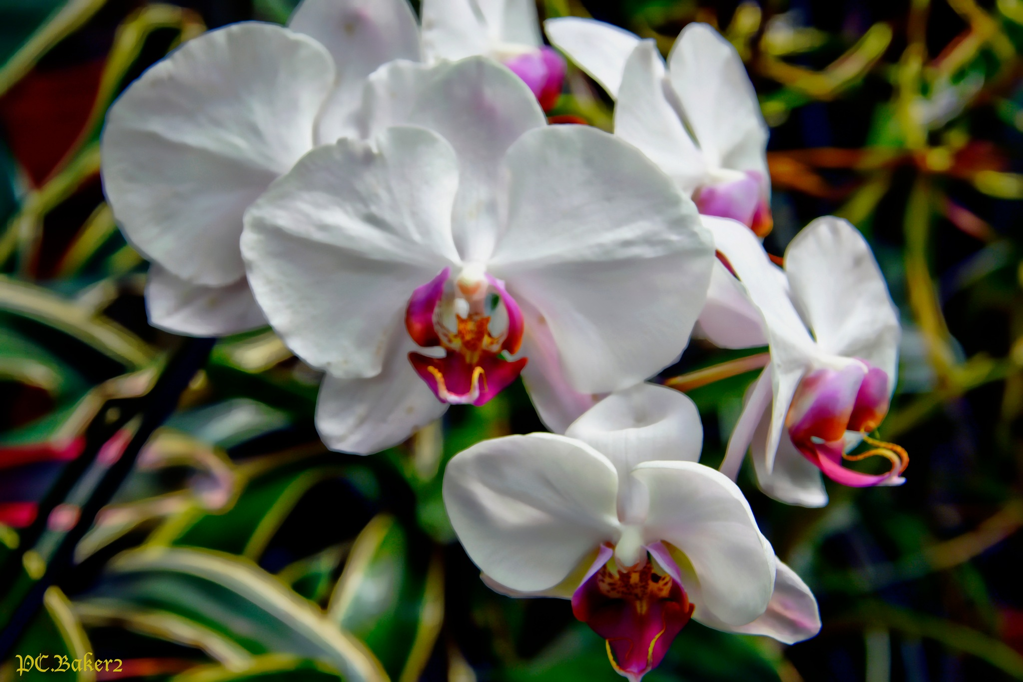 Orchid 2 by Pete Baker
