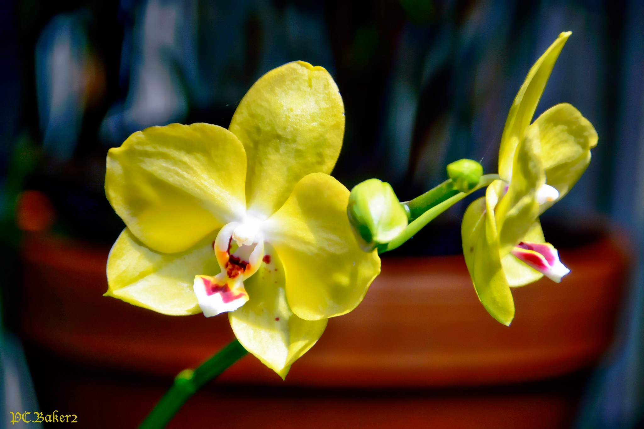 Orchid1 by Pete Baker