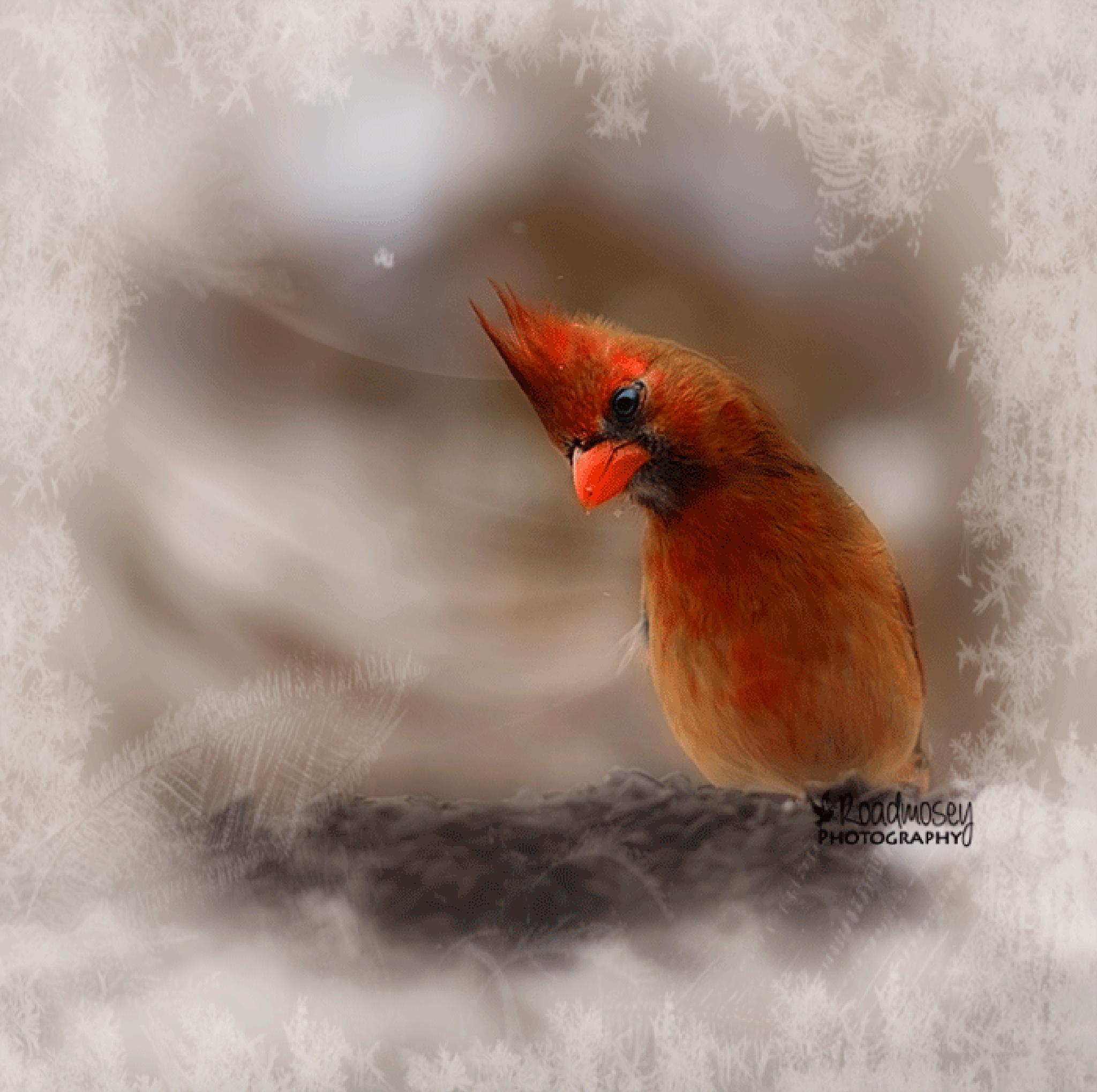 Female Cardinal by Road Mosey Photography - Robin Brandjes