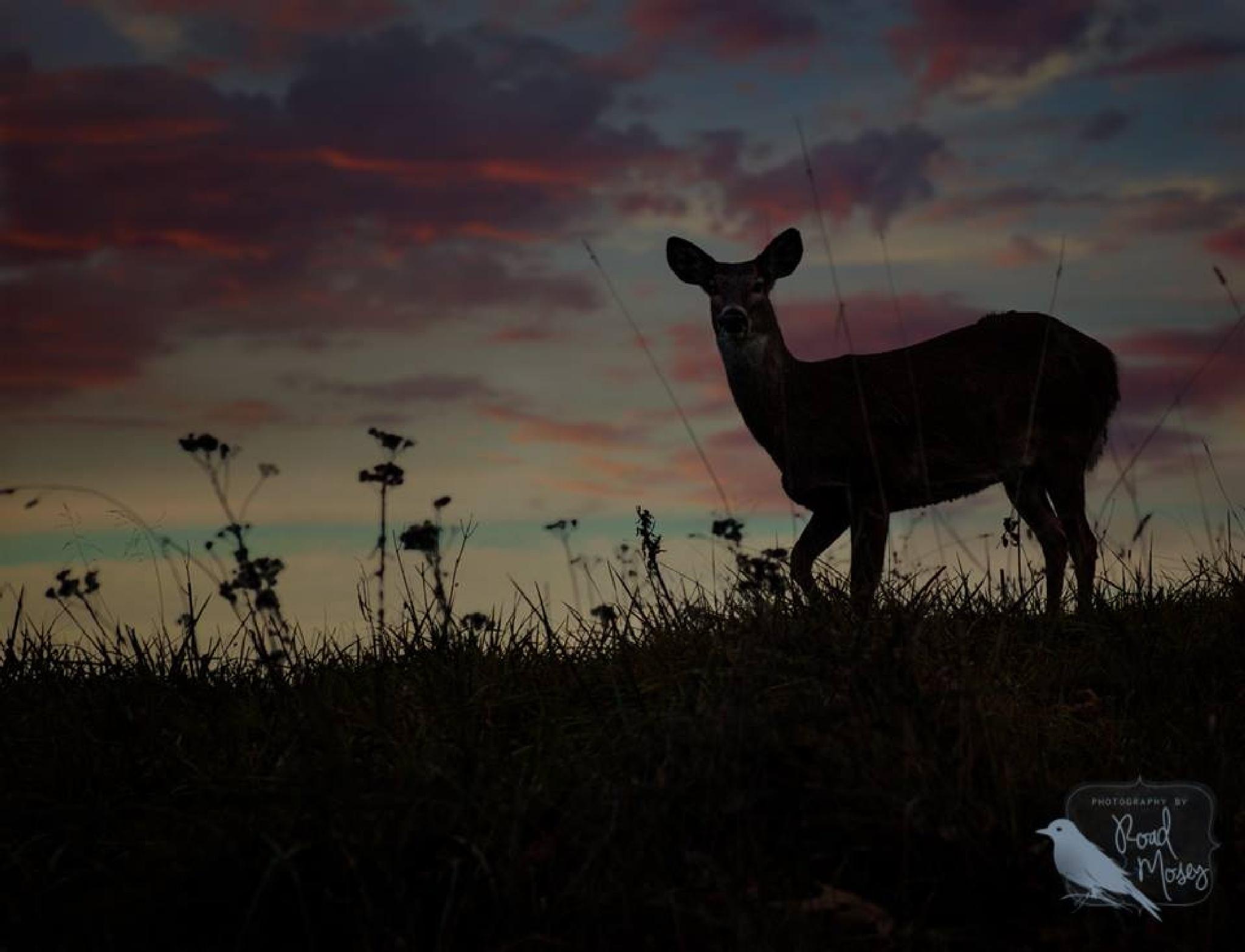 West Virginia Nightlife by Road Mosey Photography - Robin Brandjes