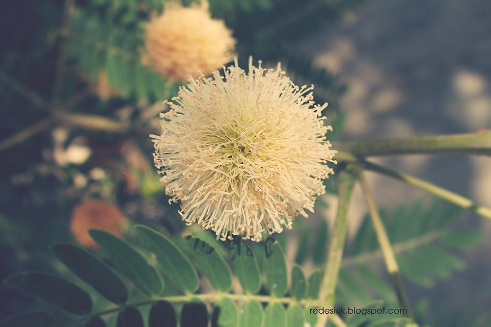 kwiatek by joannaredesiuk