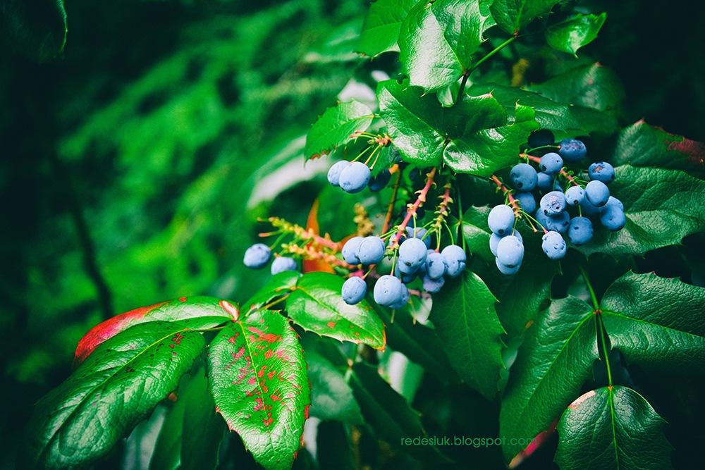 jesień by joannaredesiuk